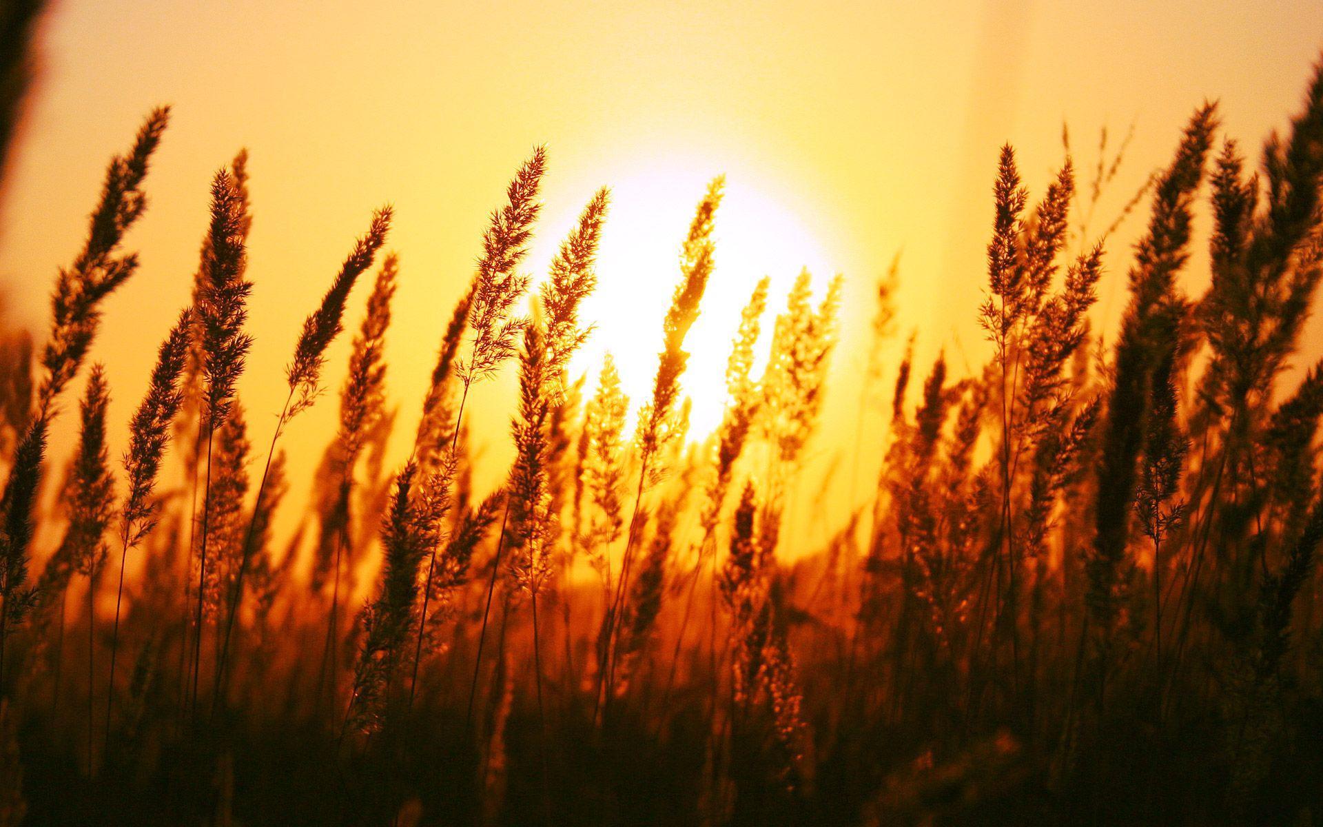 1920x1200 Hình nền Mặt trời mọc đẹp
