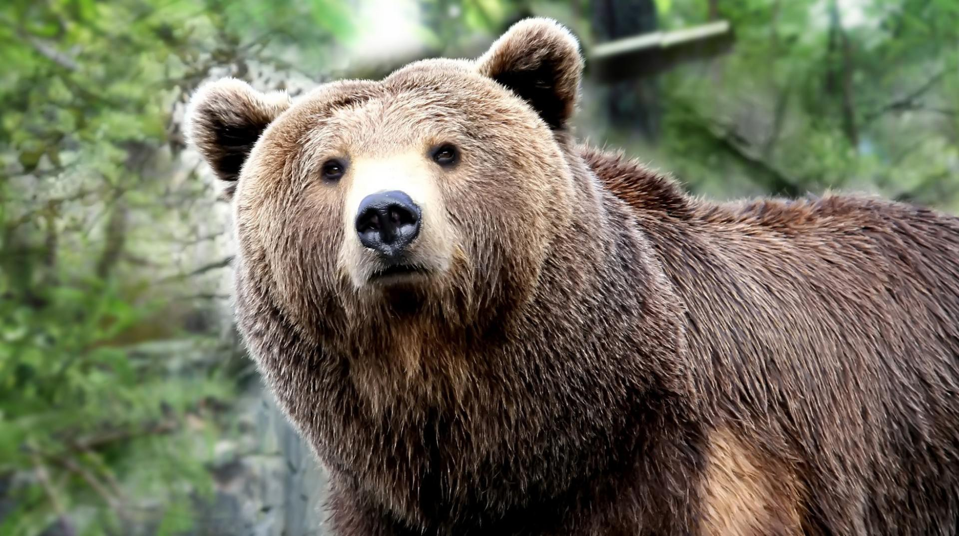 52 Best Free Cool Native American Bear Wallpapers Wallpaperaccess