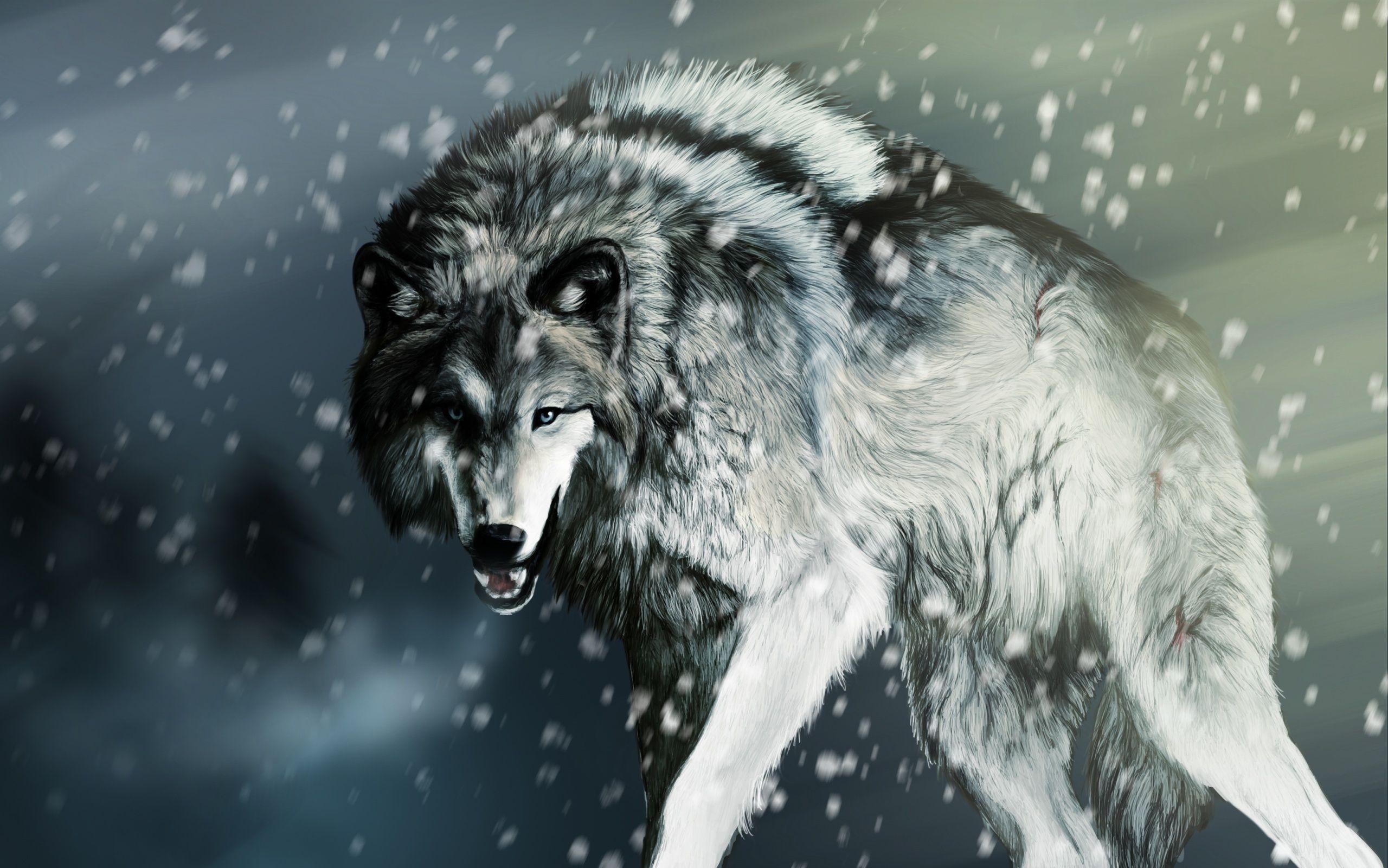 Alpha Wolf Wallpapers Top Free Alpha Wolf Backgrounds Wallpaperaccess
