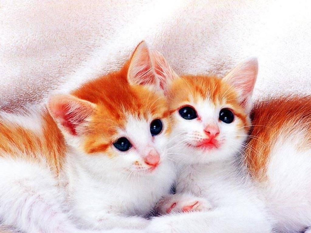 Cute Cats And Kittens Wallpapers Top Free Cute Cats And Kittens Backgrounds Wallpaperaccess