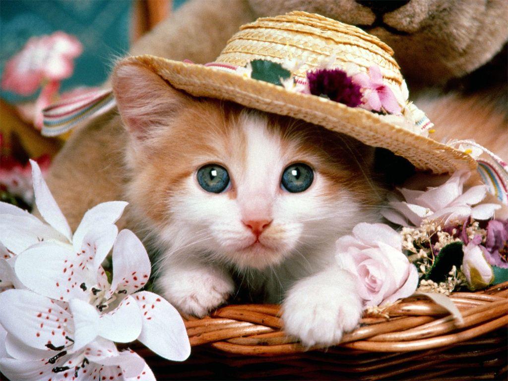 Download wallpaper x dog cat kitten puppy grass