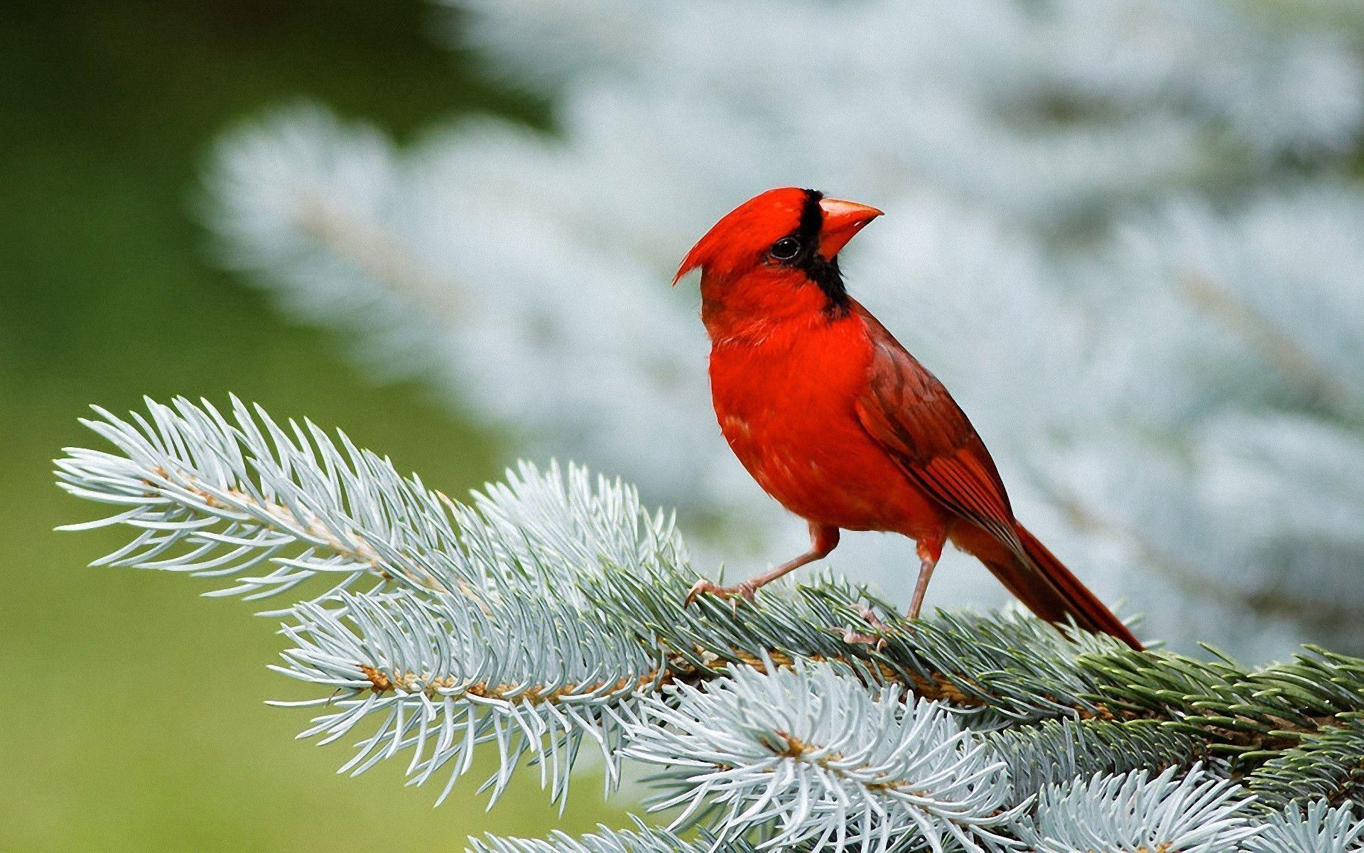 Bird Wallpapers Top Free Bird Backgrounds Wallpaperaccess Best high quality 4k ultra hd wallpapers collection for your phone. bird wallpapers top free bird