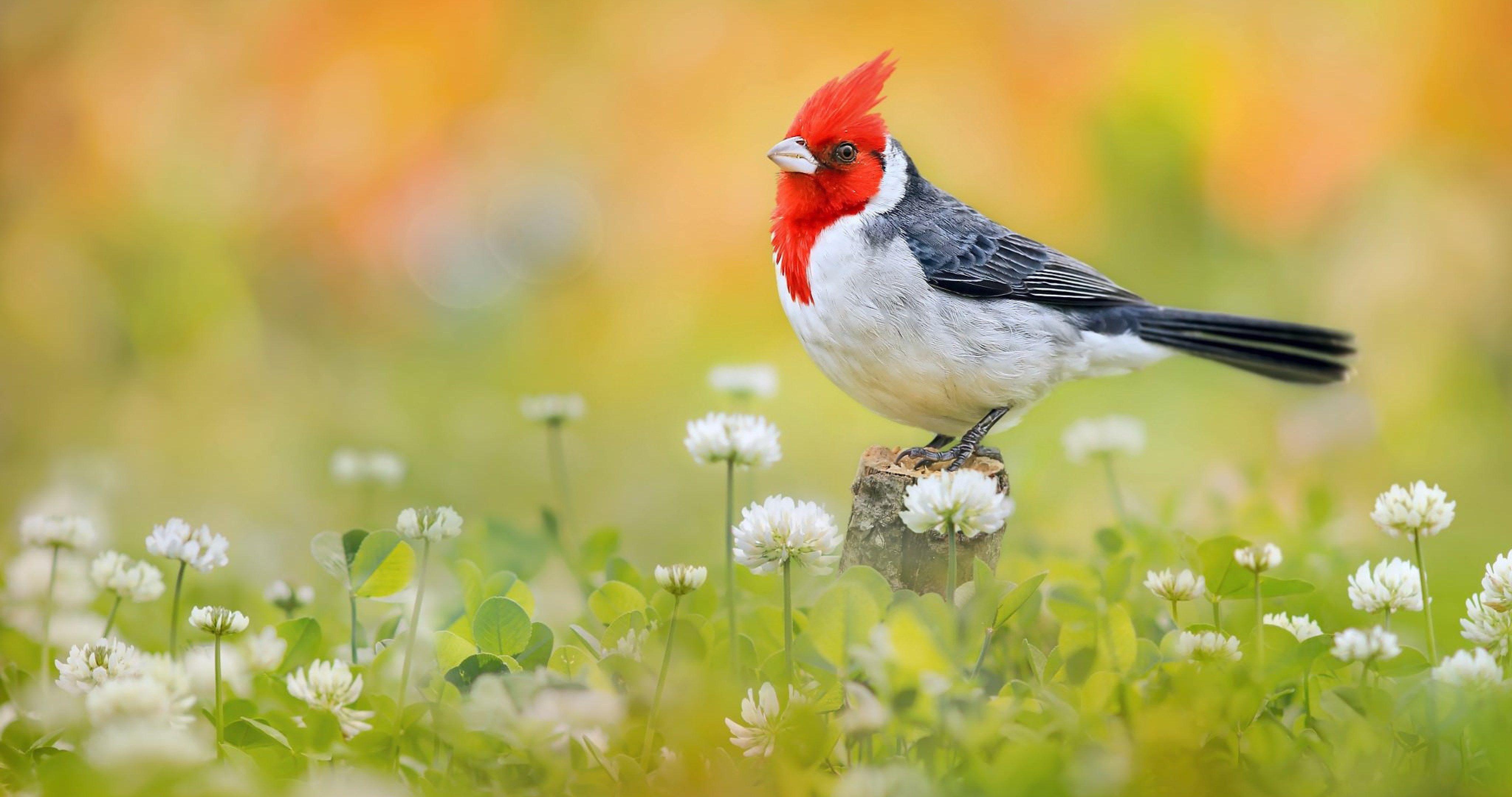 Bird 4k Wallpapers Top Free Bird 4k Backgrounds Wallpaperaccess