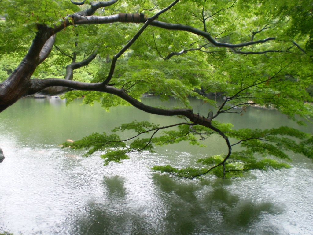 Japanese Garden Wallpapers: Japanese Tea Garden Wallpapers