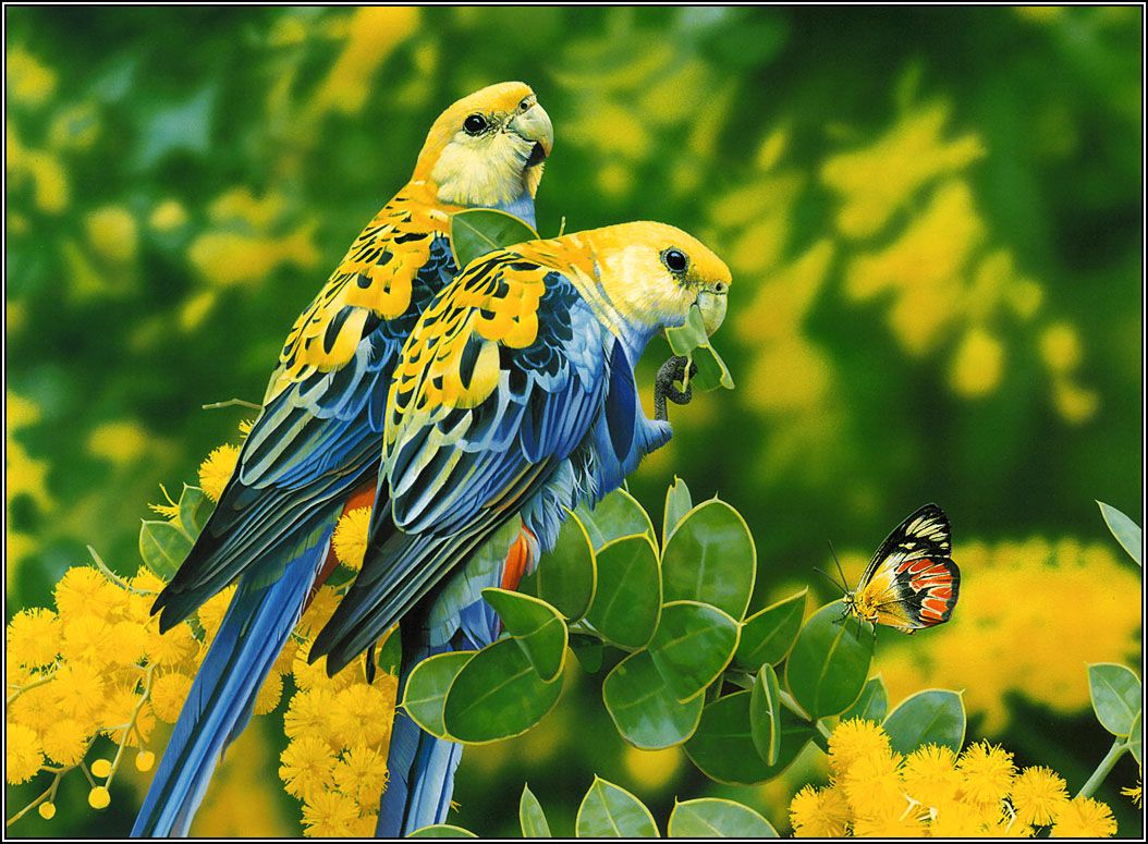 Beautiful Birds Wallpapers Top Free Beautiful Birds Backgrounds Wallpaperaccess
