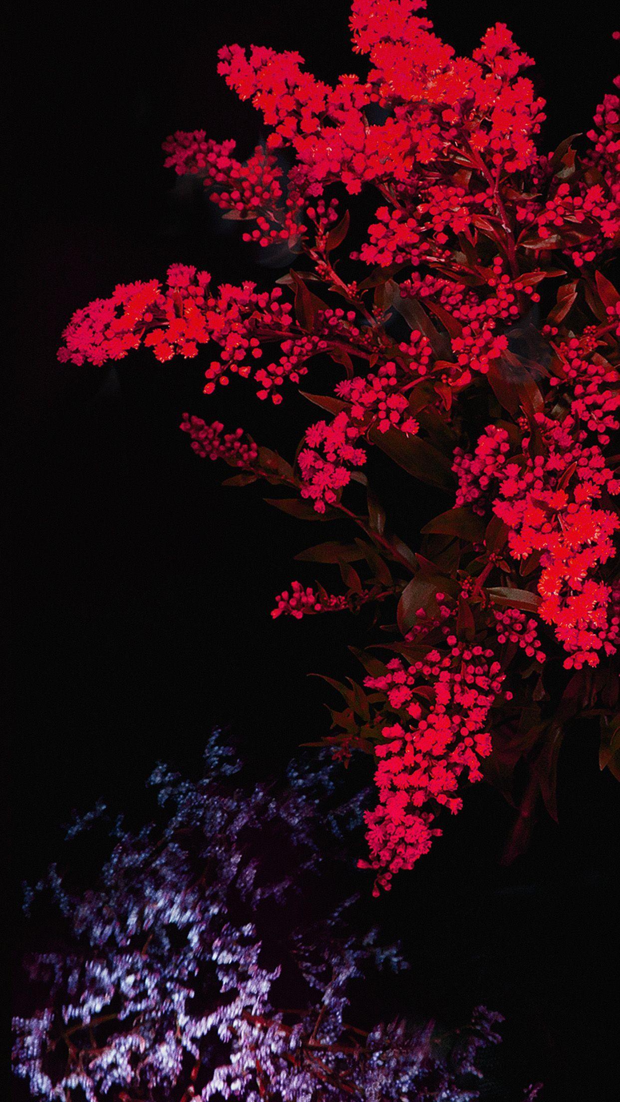 Dark Red Flower Wallpapers Top Free Dark Red Flower Backgrounds Wallpaperaccess
