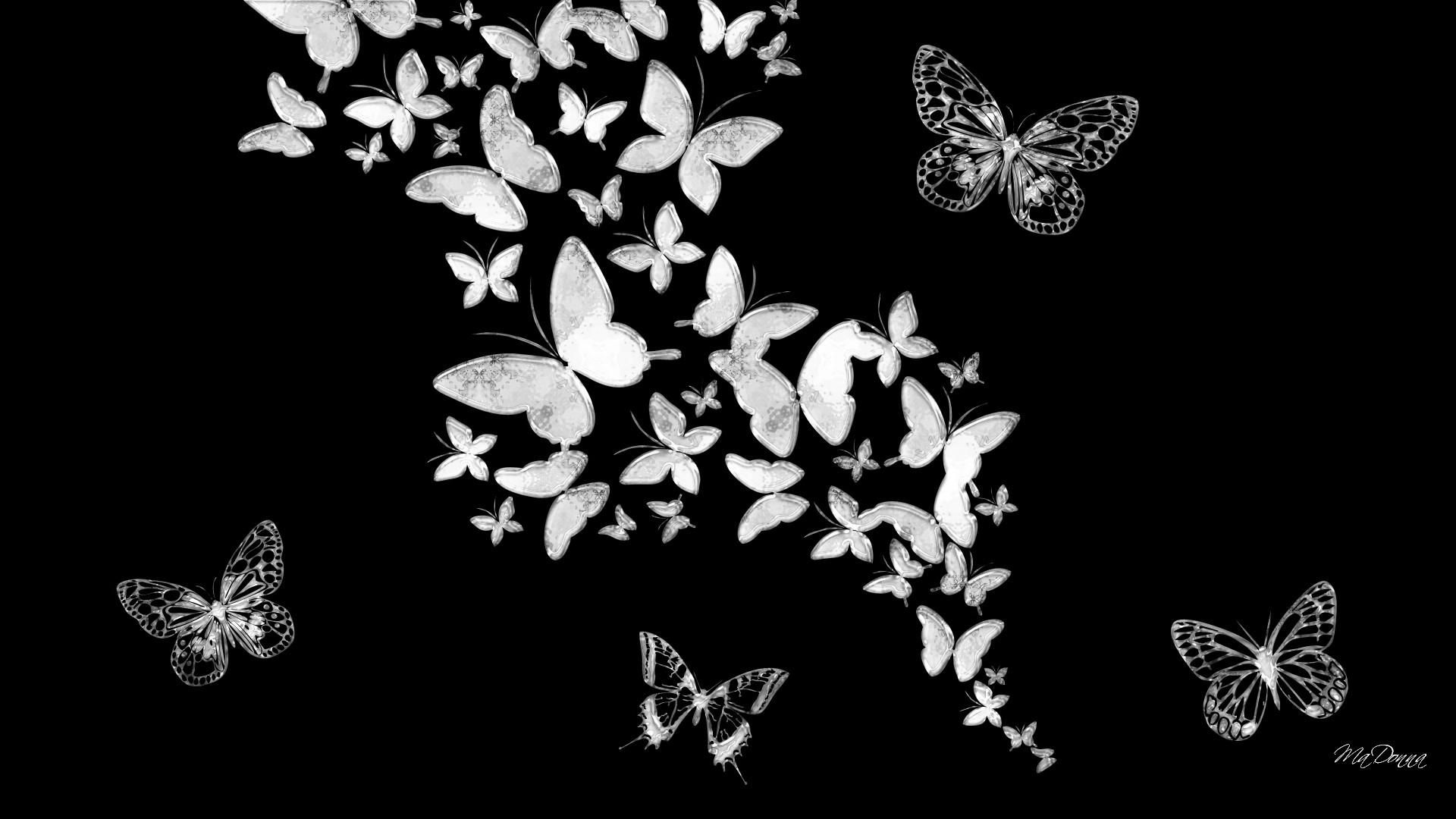 Black Butterfly Wallpapers Top Free Black Butterfly Backgrounds