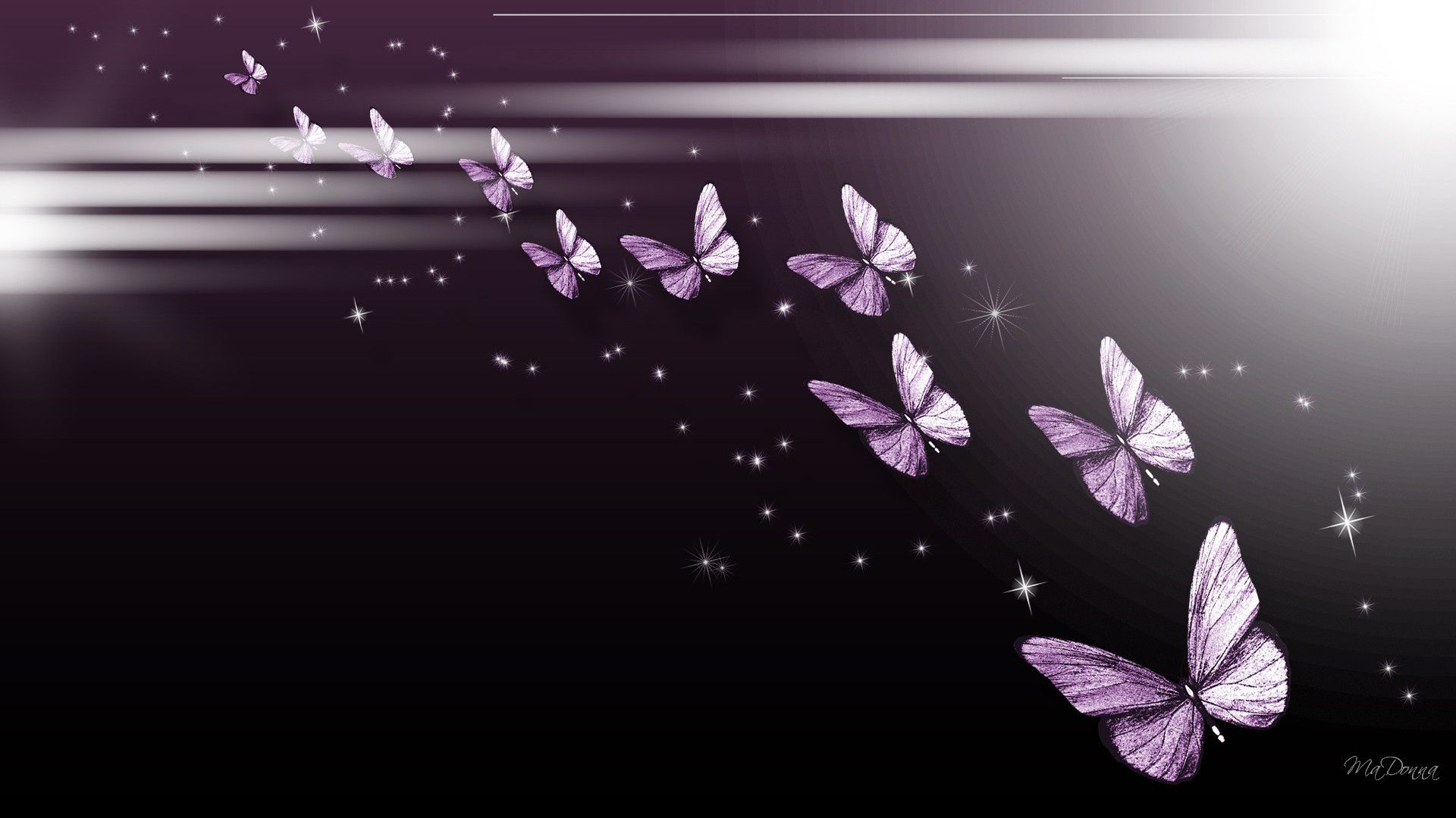 Black Butterfly Wallpapers Top Free Black Butterfly Backgrounds Wallpaperaccess