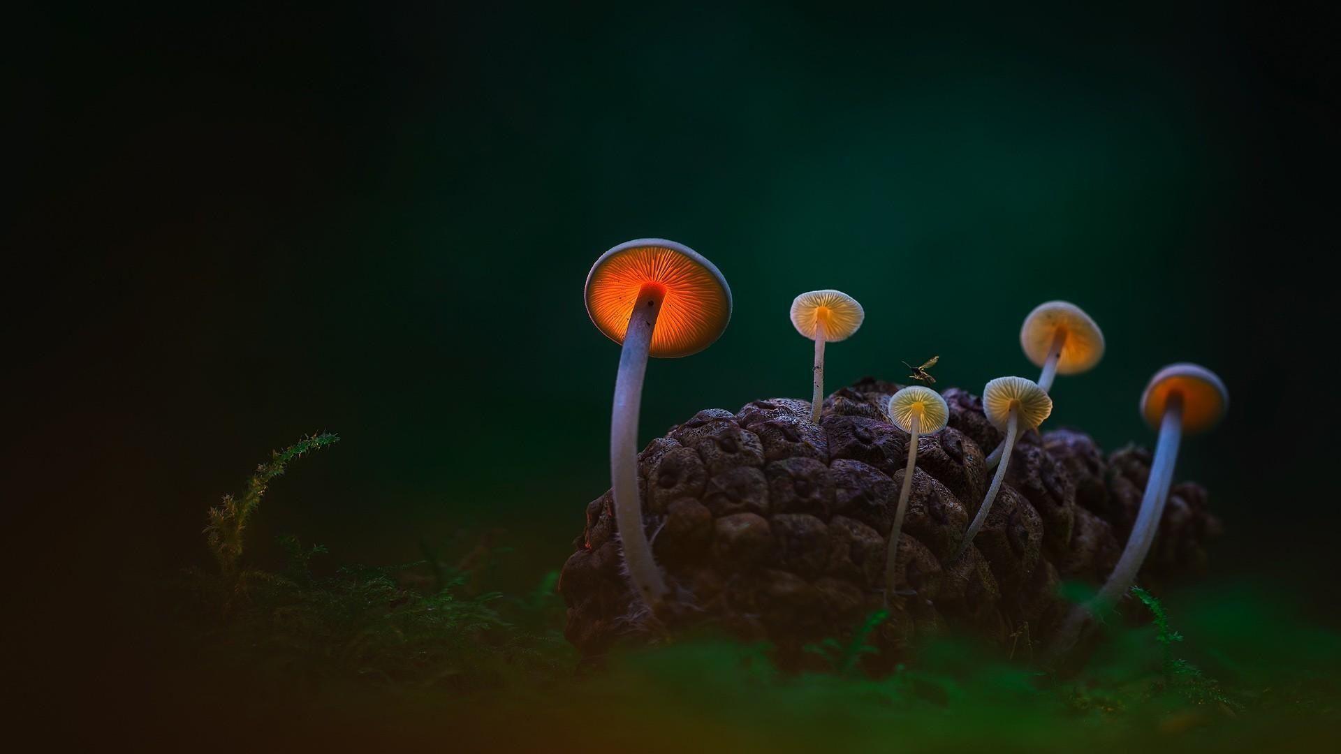 Colour Mushrooms HD Wallpapers - Top ...