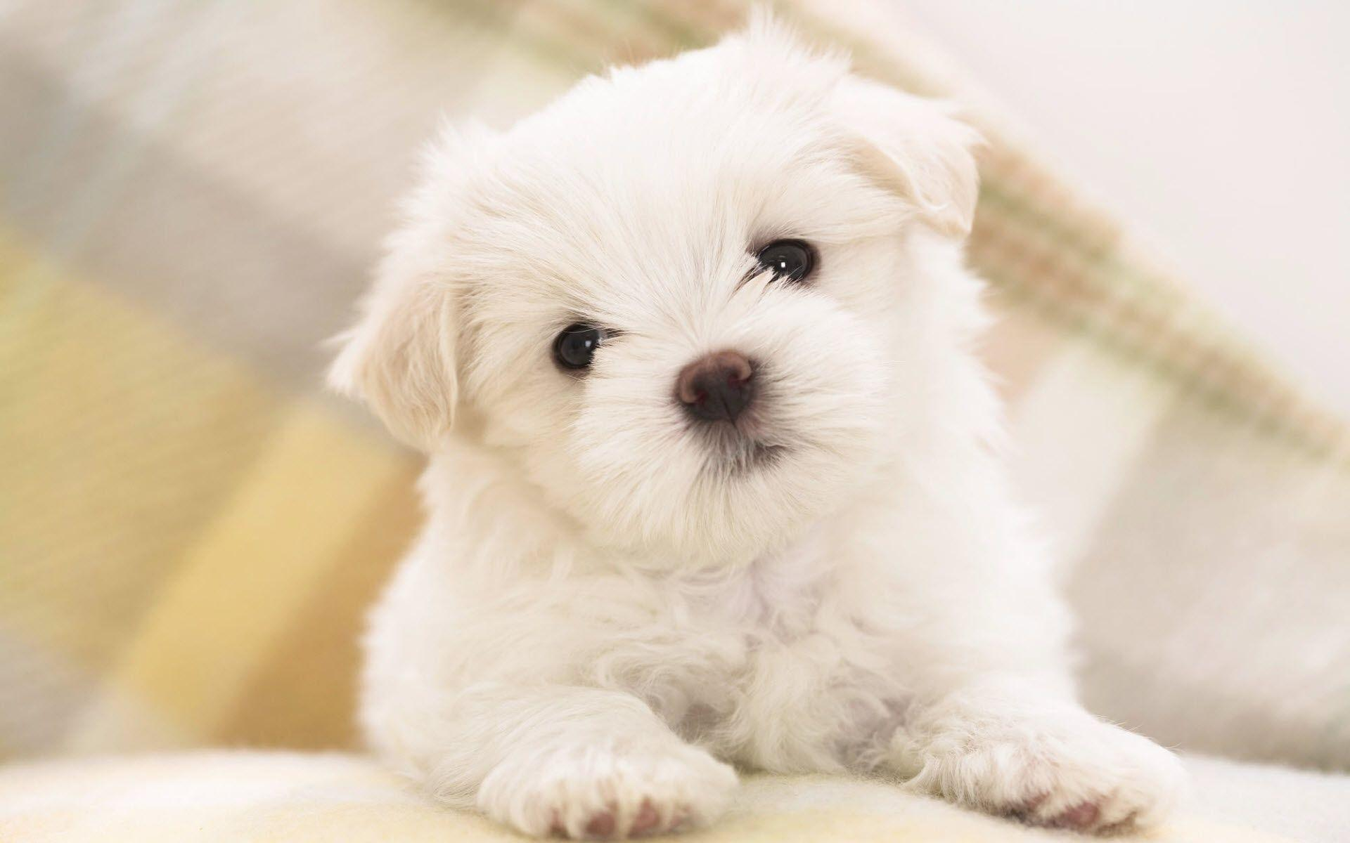Top Free Puppy Desktop Backgrounds