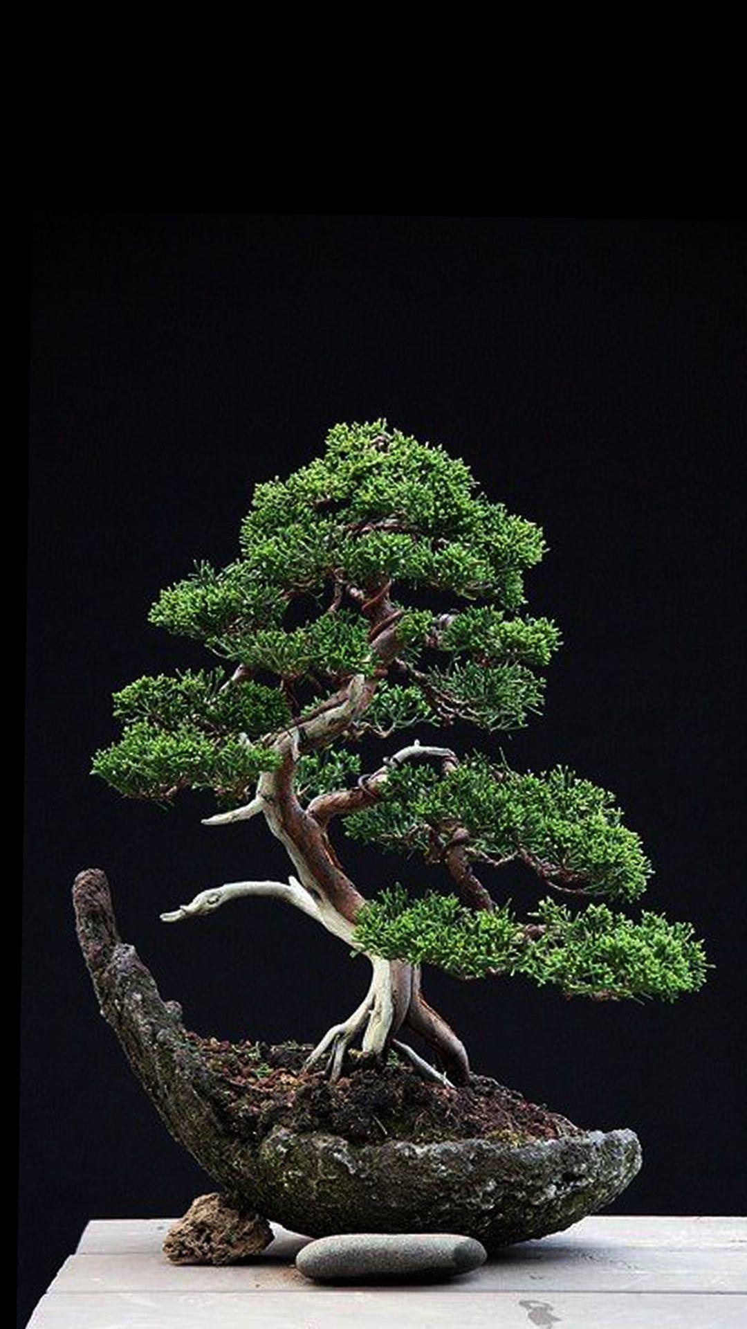 Juniper Tree Wallpapers - Top Free Juniper Tree ...