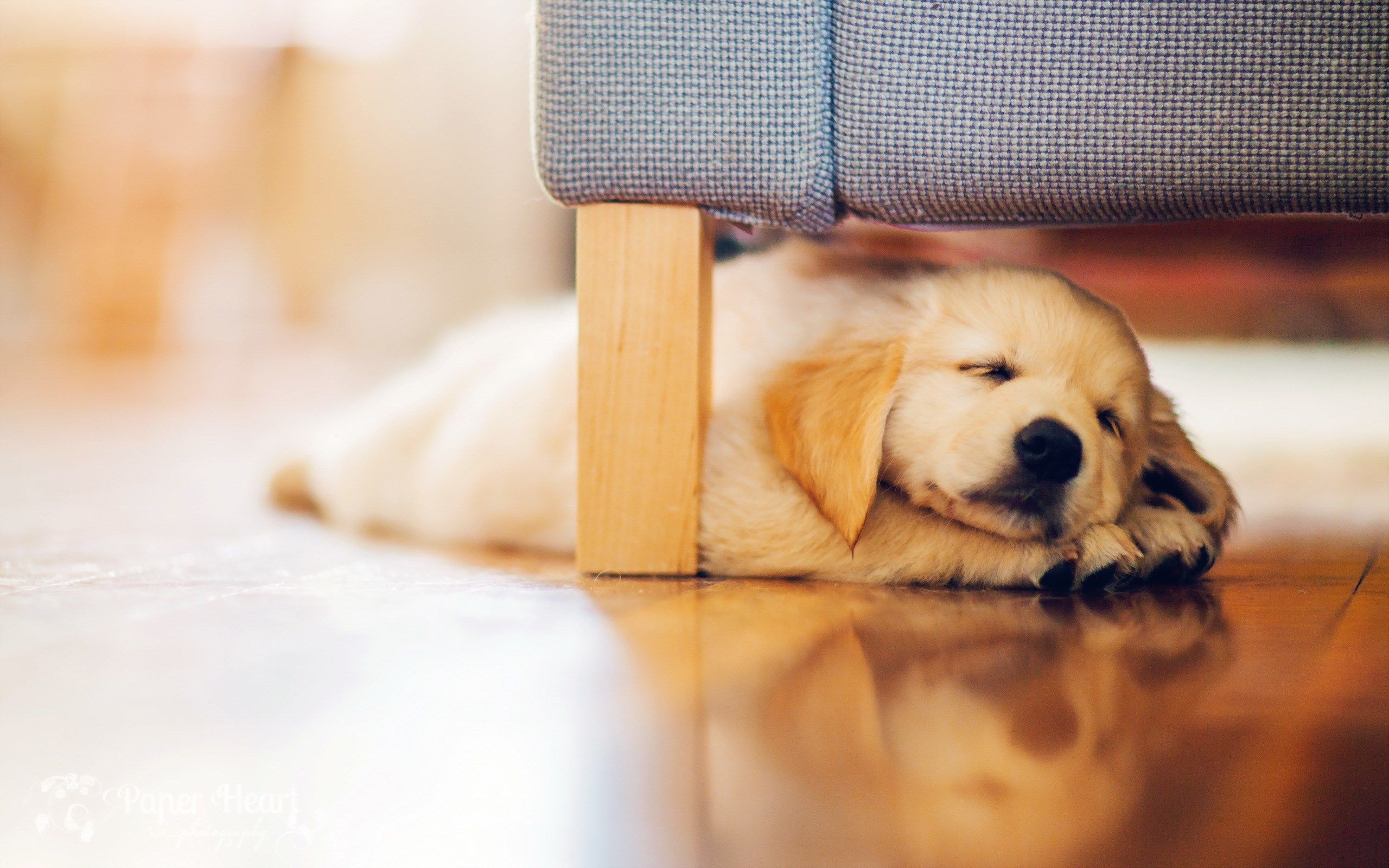 Puppy Desktop Wallpapers Top Free Puppy Desktop