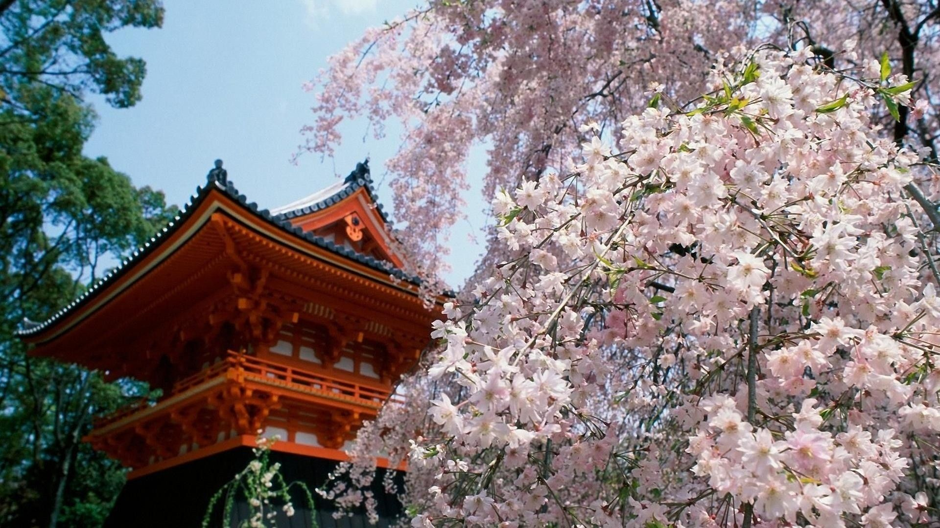 Japanese Garden Wallpapers: Japanese Garden Cherry Blossom Wallpapers