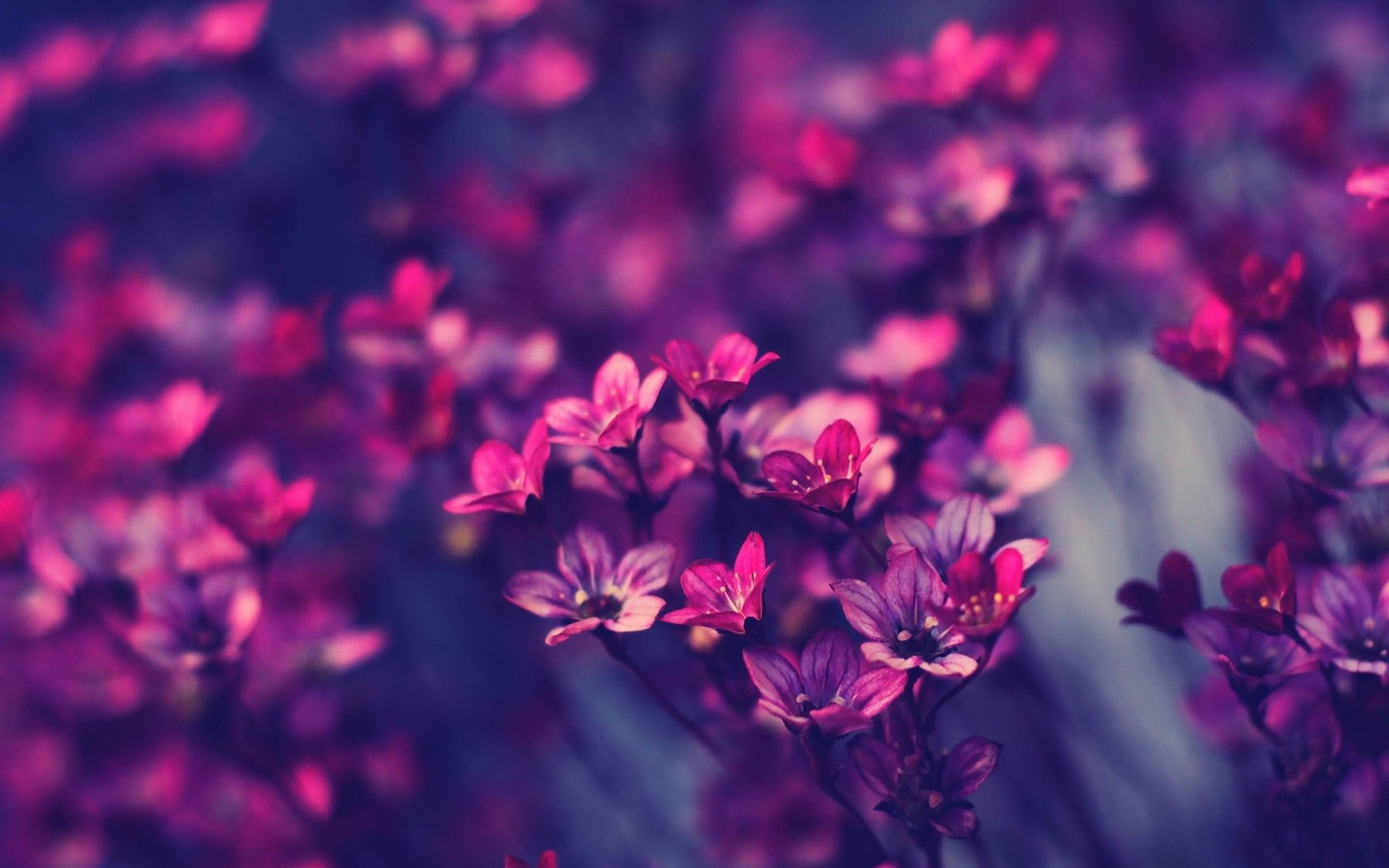 Flowers Laptop Wallpapers Top Free Flowers Laptop Backgrounds