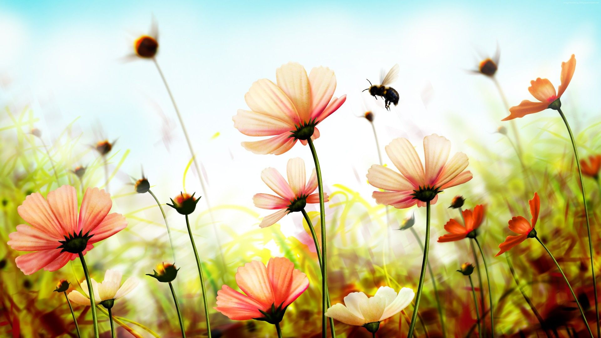Flowers Laptop Wallpapers Top Free Flowers Laptop Backgrounds Wallpaperaccess