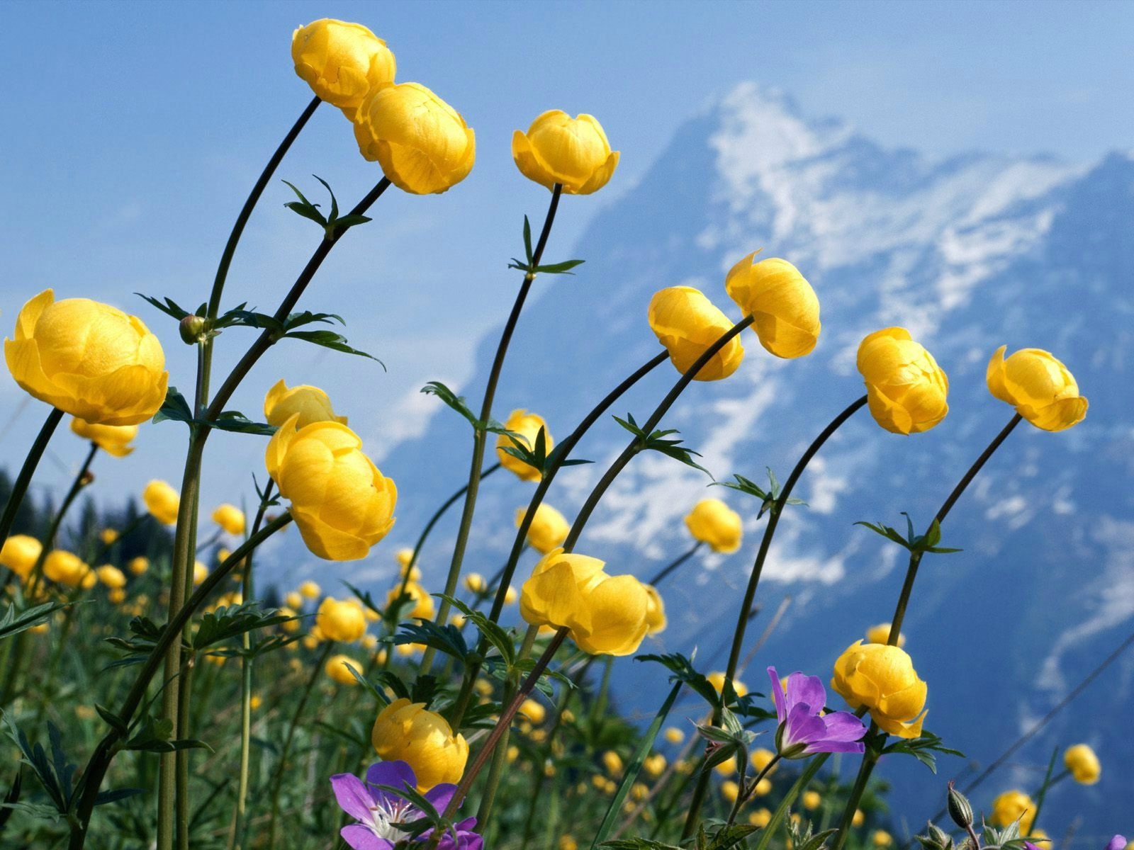 66 Best Free Flowers Laptop Wallpapers Wallpaperaccess