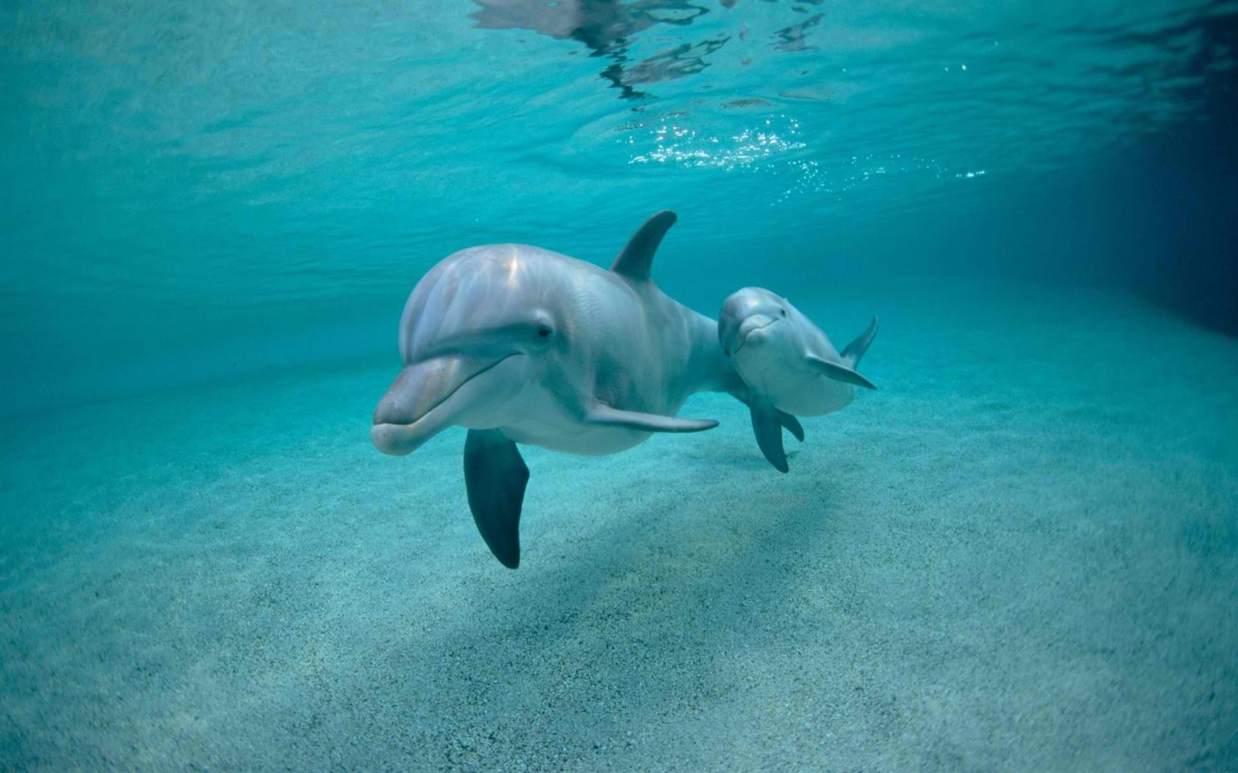 20 best free baby dolphin wallpapers wallpaperaccess