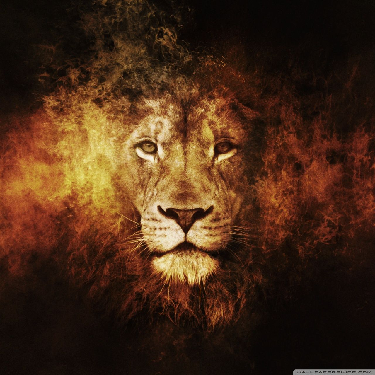 Lion Wallpapers Top Free Lion Backgrounds Wallpaperaccess