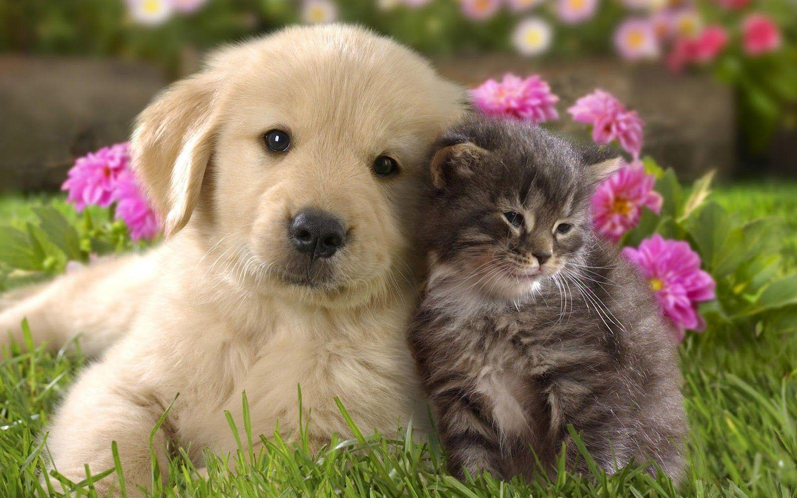 Cats and Dogs Wallpapers , Top Free Cats and Dogs