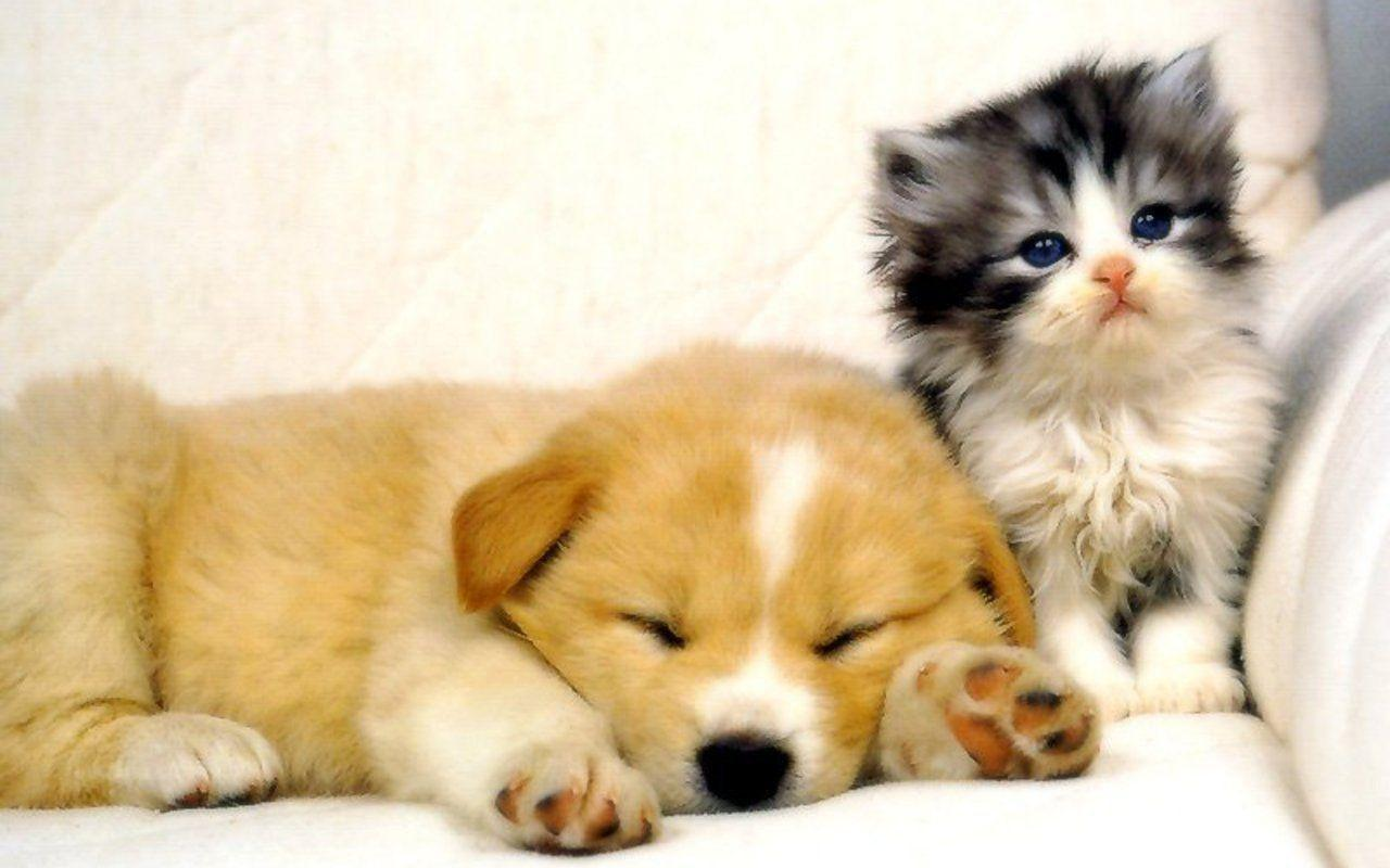 Cats And Dogs Wallpapers Top Free Cats And Dogs Backgrounds Wallpaperaccess