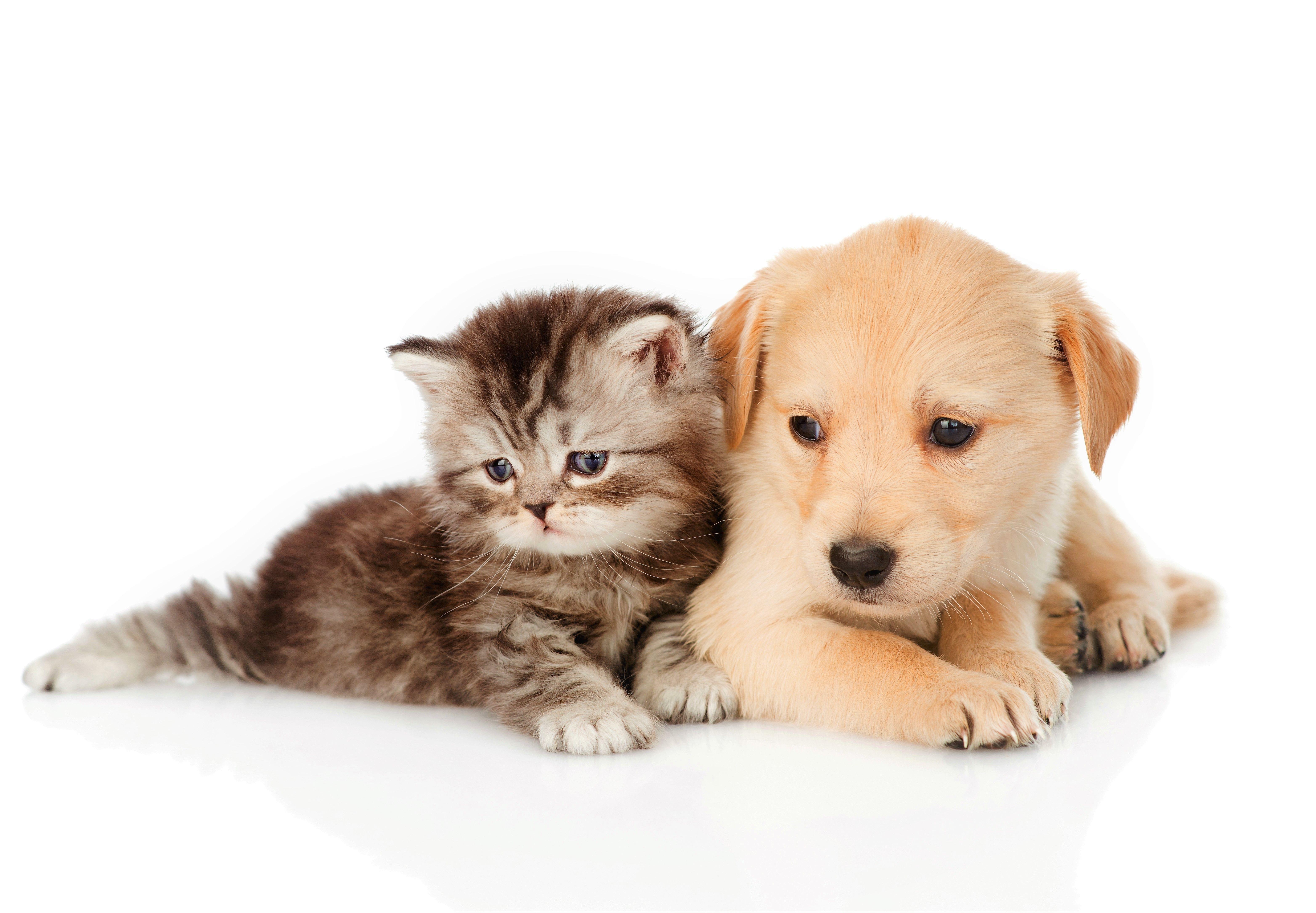 6256x4341 خلفية HD Cat & Dog وصورة خلفية