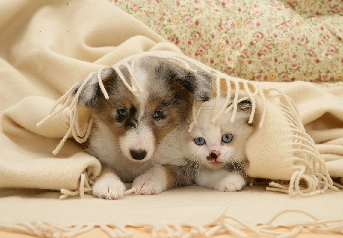 Cat And Dog Desktop Wallpapers Top Free Cat And Dog Desktop Backgrounds Wallpaperaccess