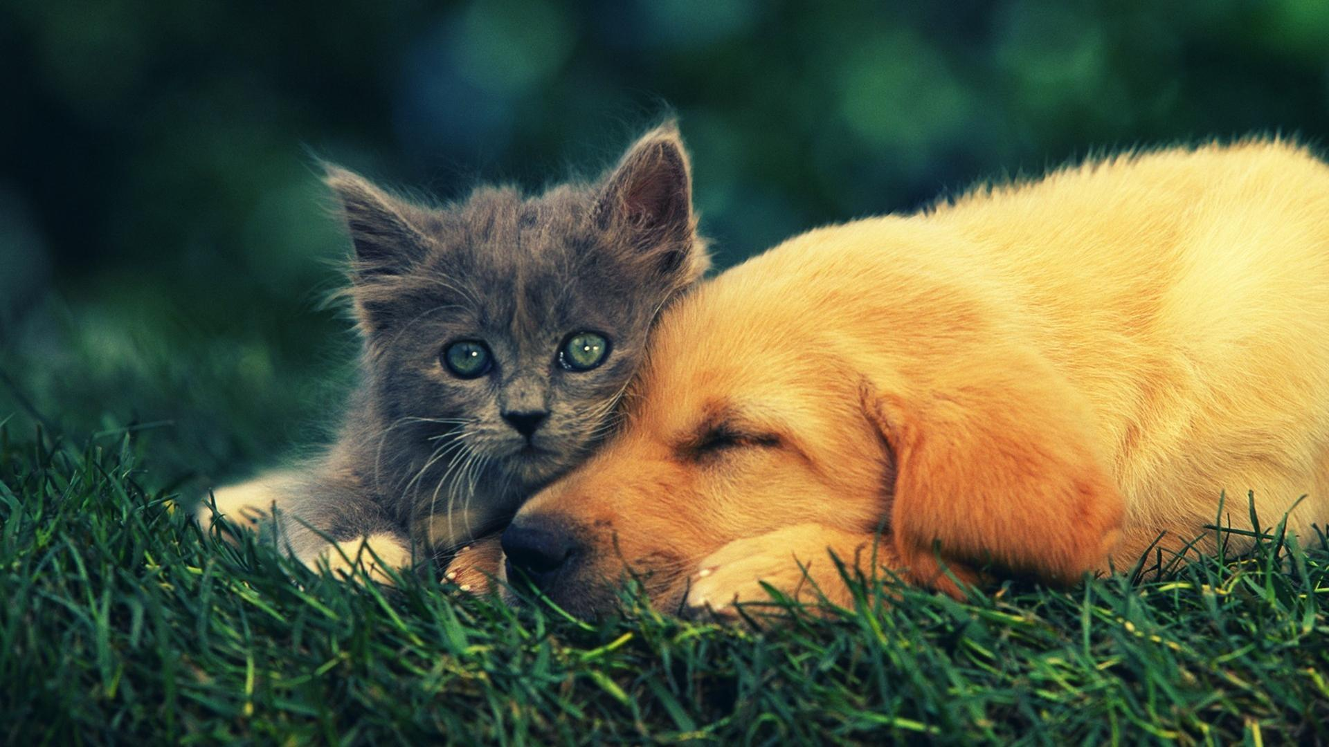 Cats And Dogs Wallpapers Top Free Cats And Dogs Backgrounds
