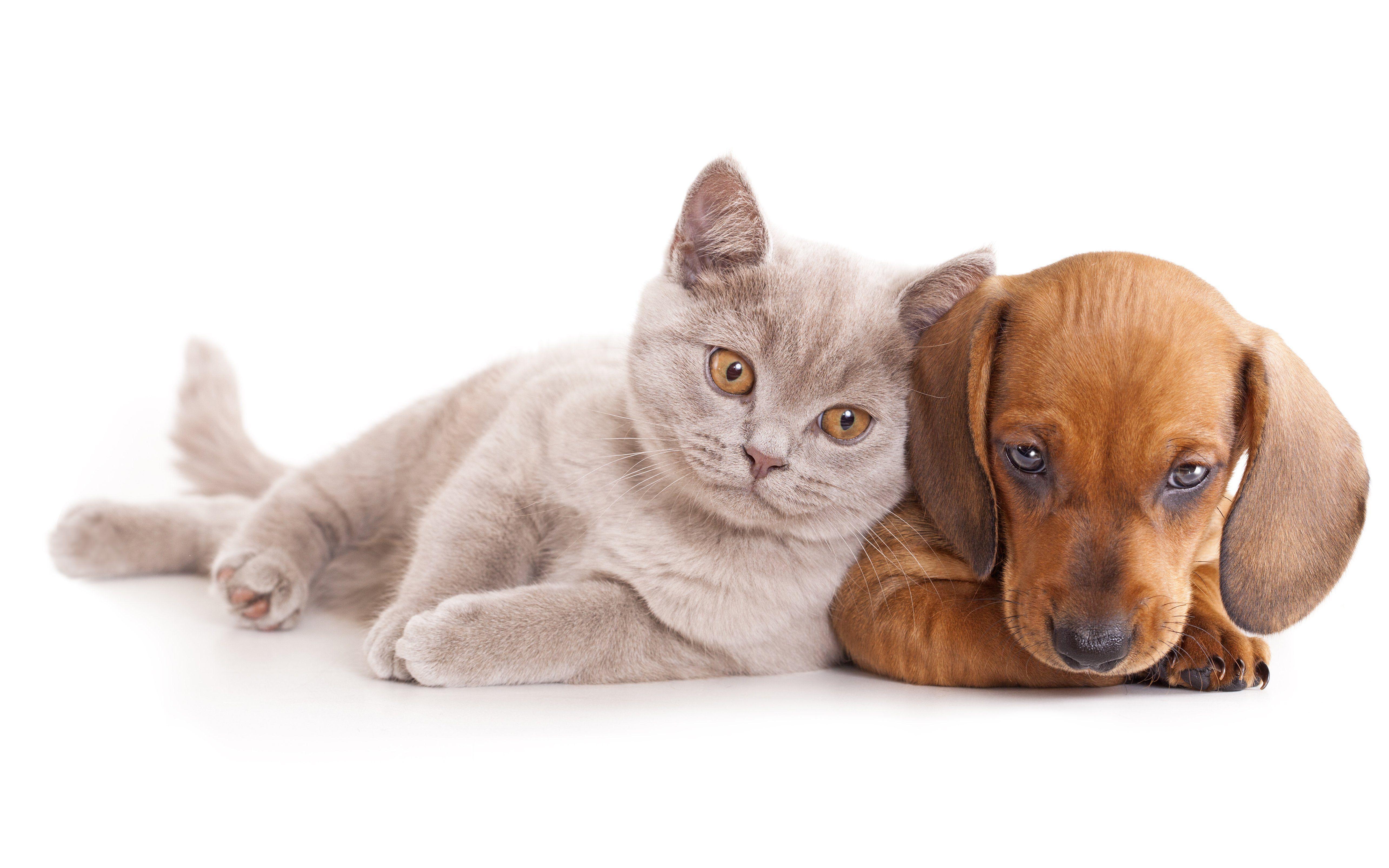 5139x3213 القطط الكلاب خلفيات HD الجراء القطط لطيف في المتجر.  عالية الدقة