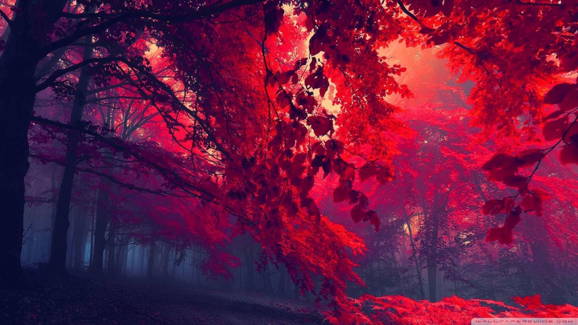 Red 1080p Wallpapers Top Free Red 1080p Backgrounds
