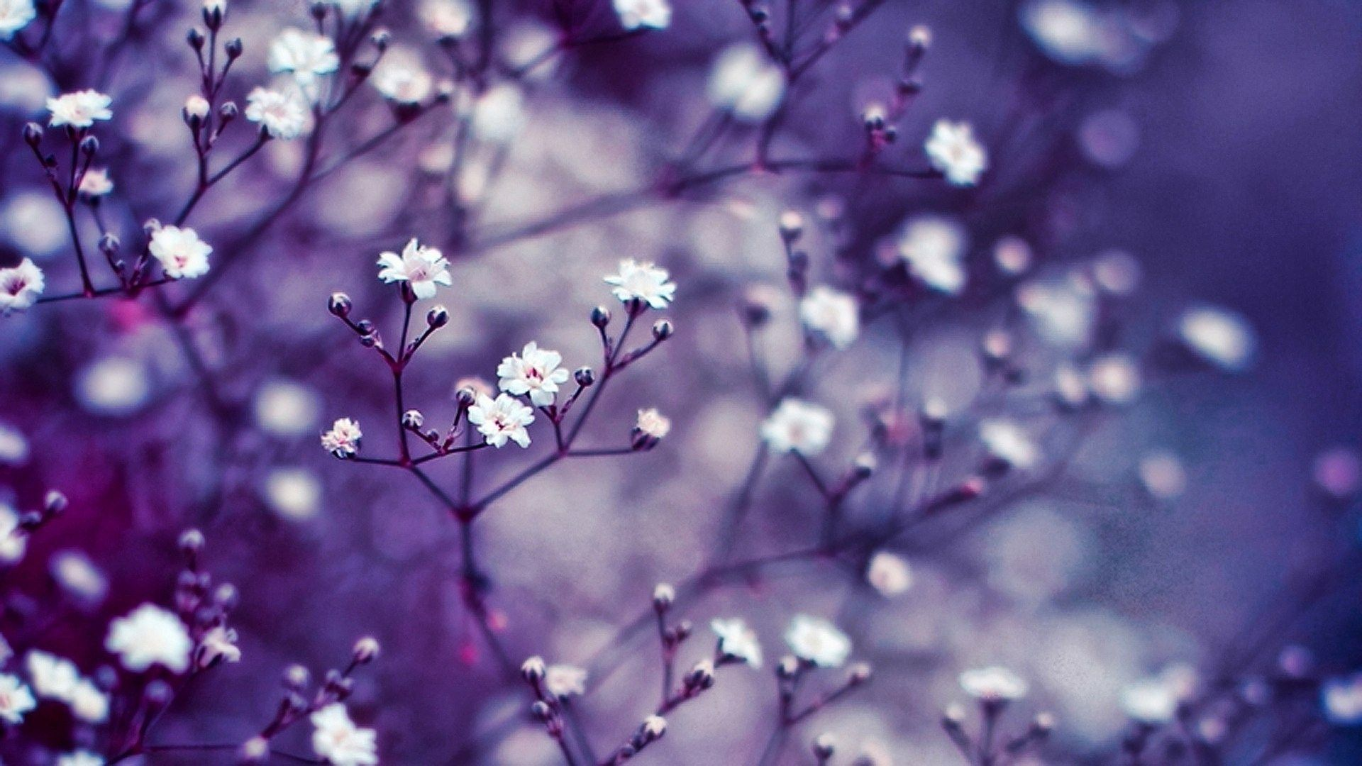 Flower Hd Wallpapers Top Free Flower Hd Backgrounds Wallpaperaccess