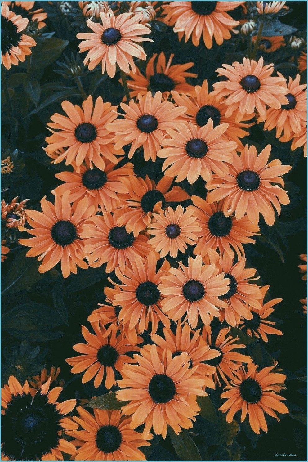 Brown Floral Iphone Wallpapers Top Free Brown Floral Iphone Backgrounds Wallpaperaccess