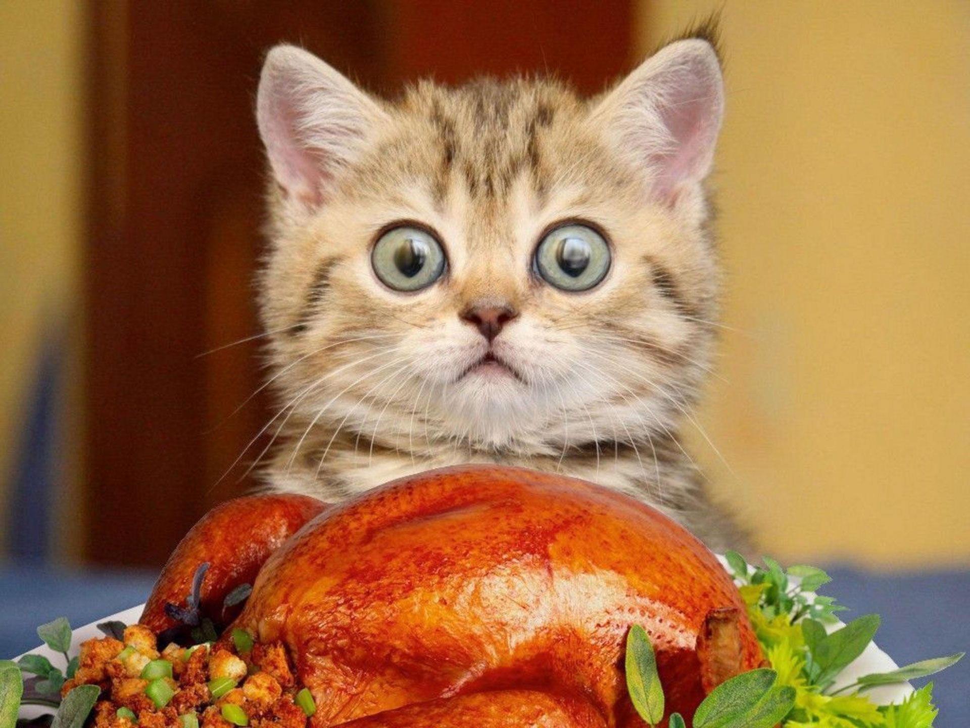 50 Best Free Cute Animal Thanksgiving Wallpapers Wallpaperaccess