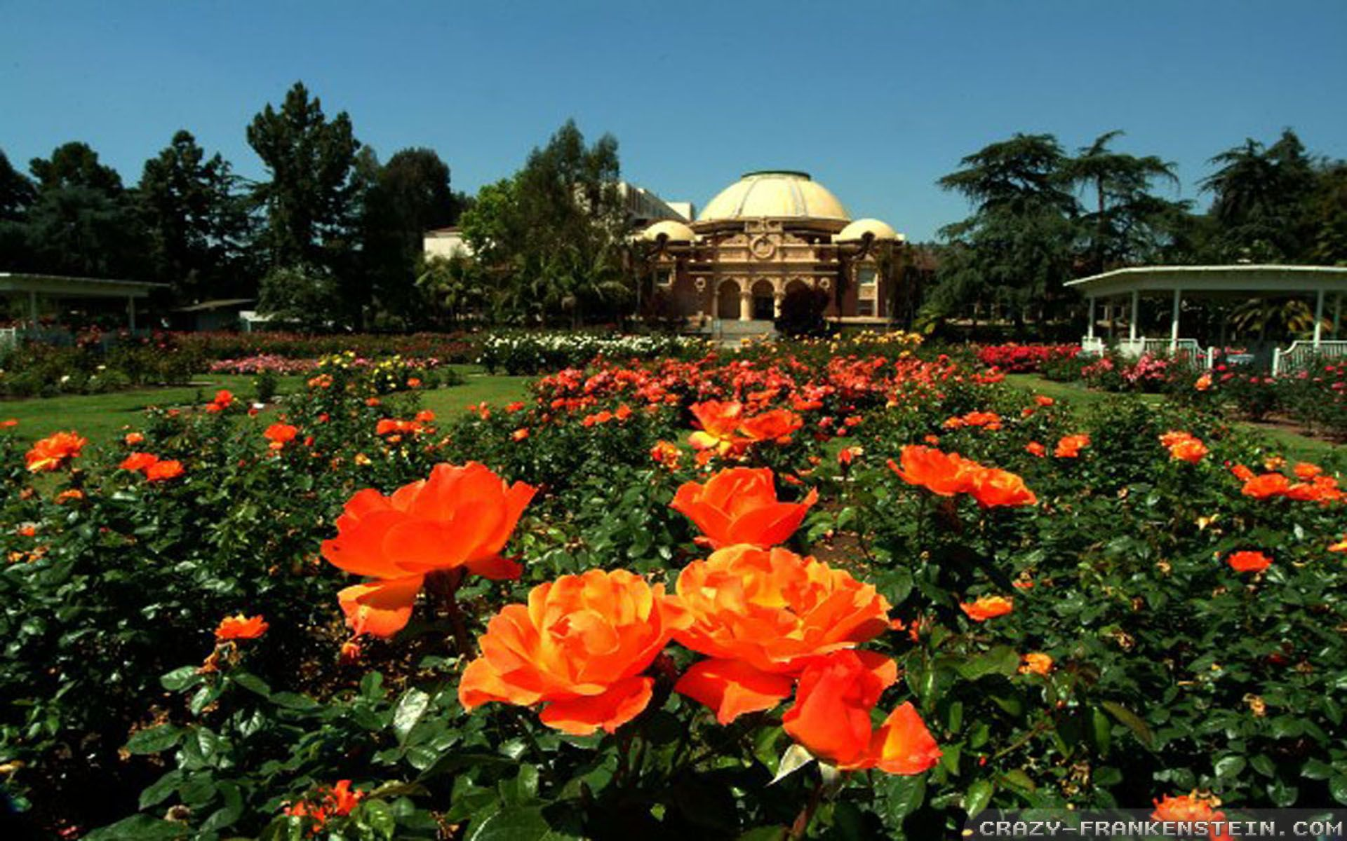 34 Best Free Rose Garden Wallpapers Wallpaperaccess