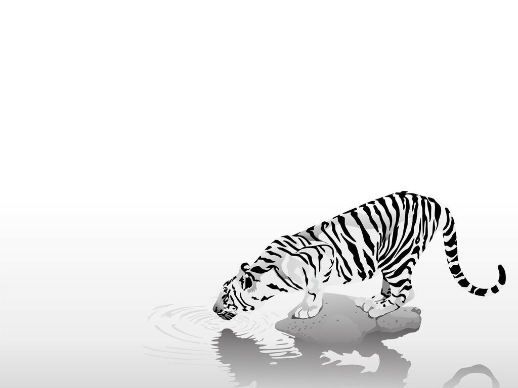 Minimalist Tiger Wallpapers Top Free Minimalist Tiger