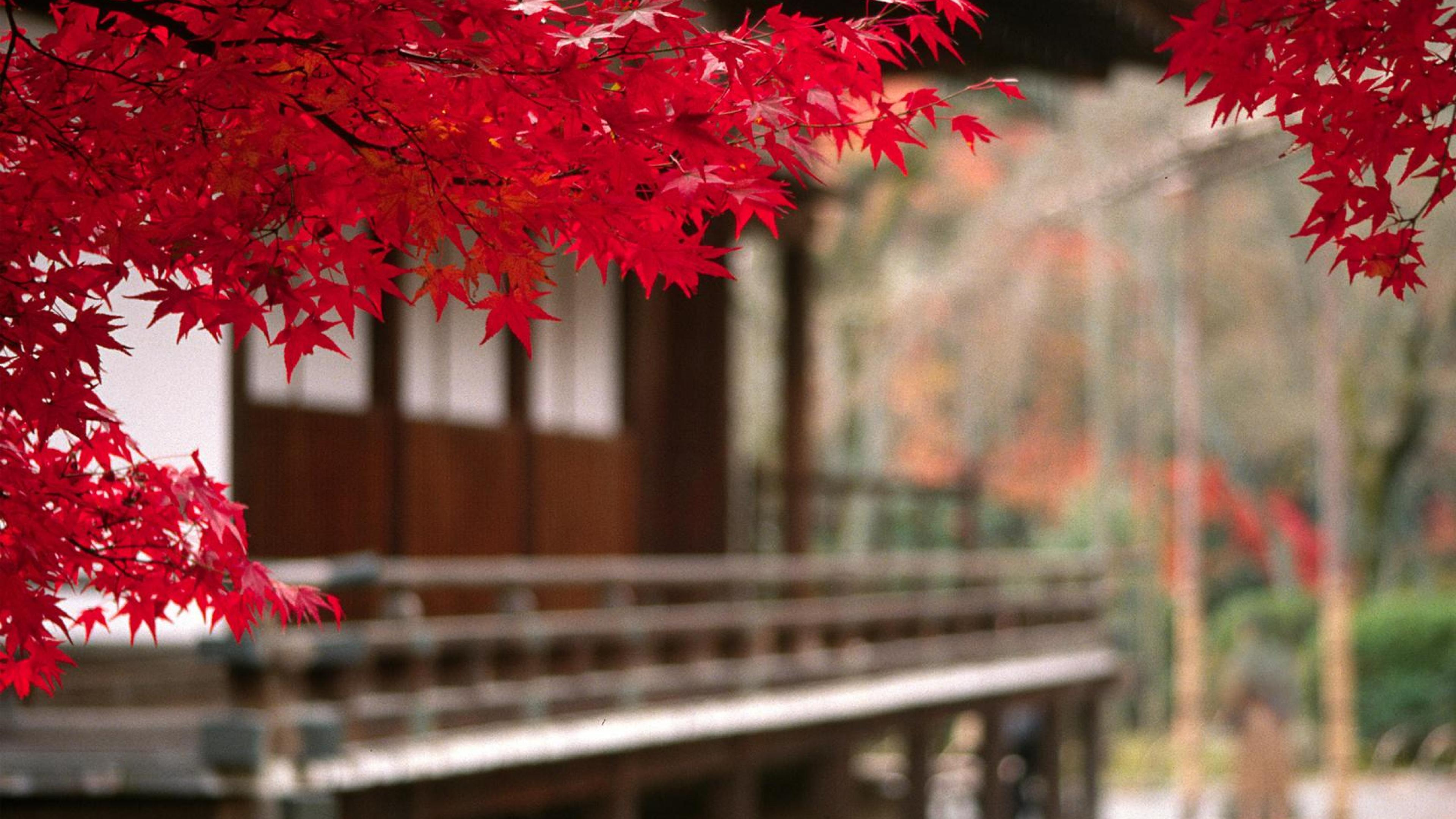 Japan 4k wallpapers top free japan 4k backgrounds - Nature japan wallpaper ...