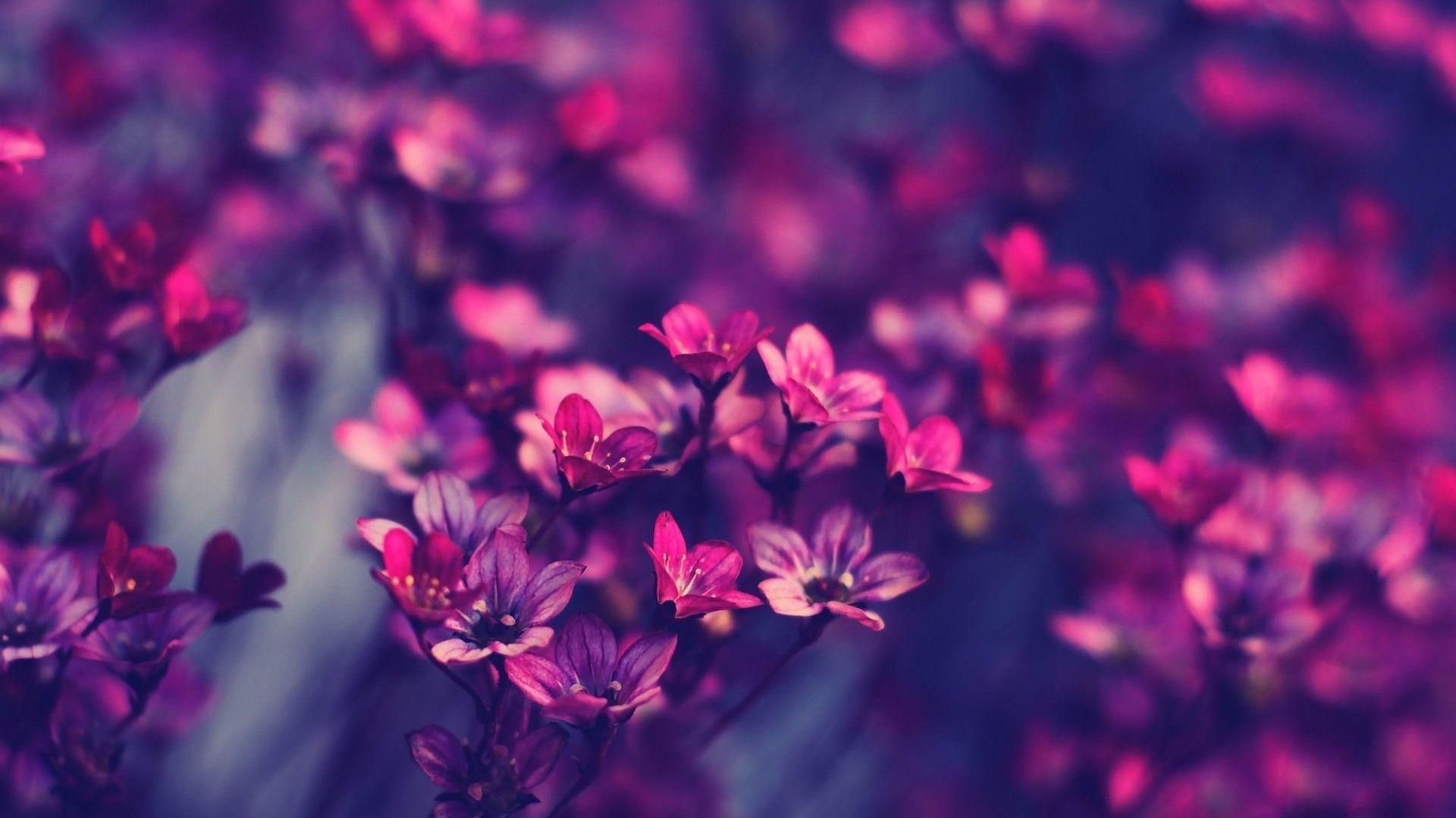 Floral Desktop Wallpapers Top Free Floral Desktop Backgrounds
