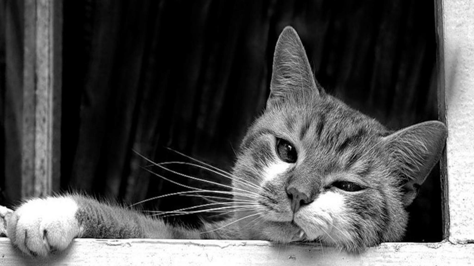 Black And White Cat Wallpapers Top Free Black And White