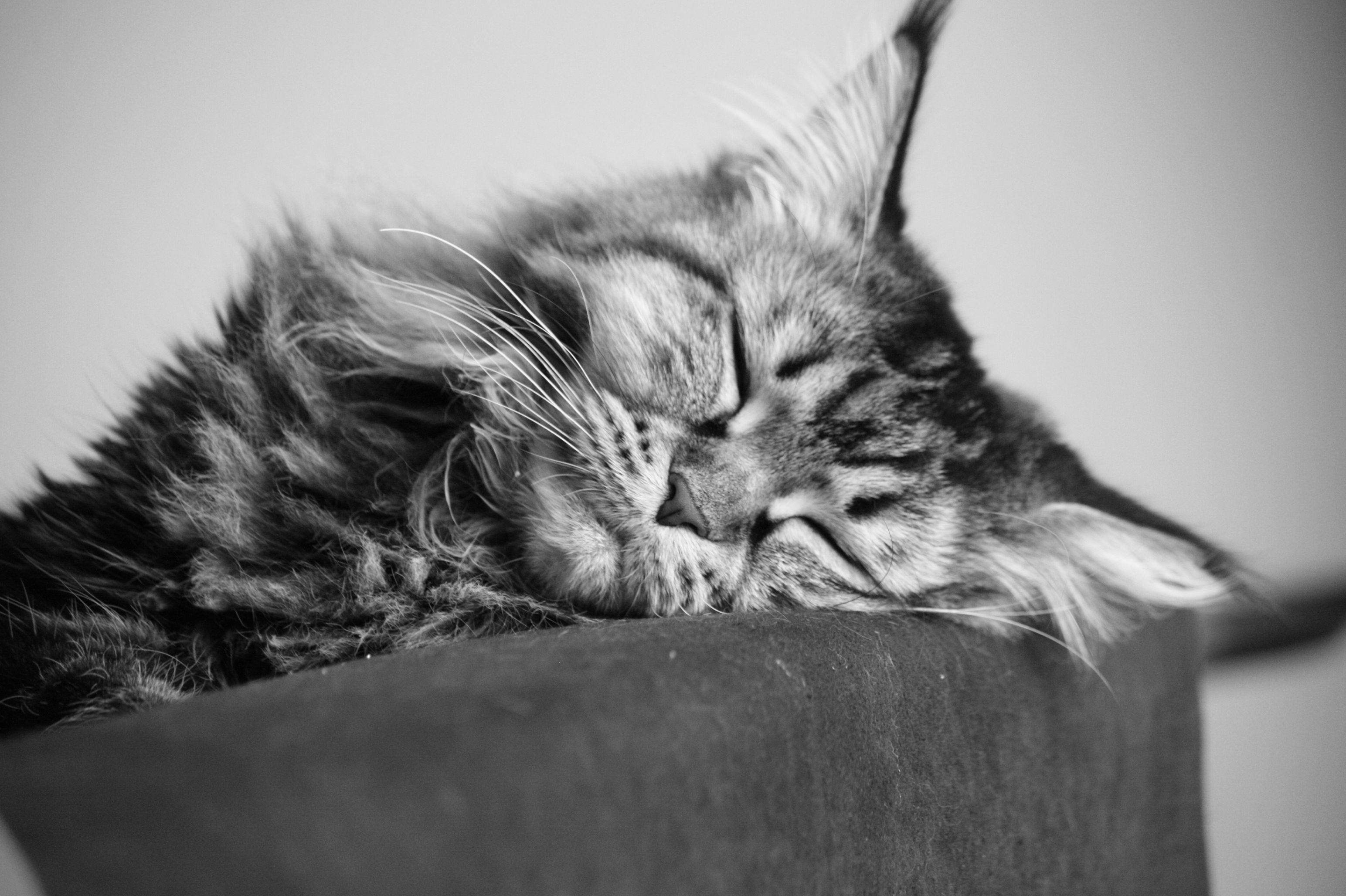 Black And White Cat Wallpapers Top Free Black And White Cat