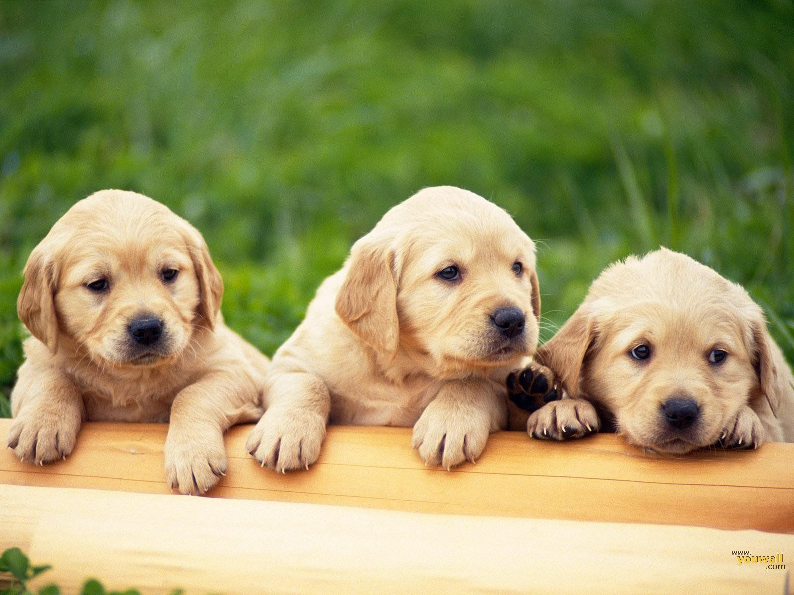 3d Dog Wallpapers Top Free 3d Dog Backgrounds