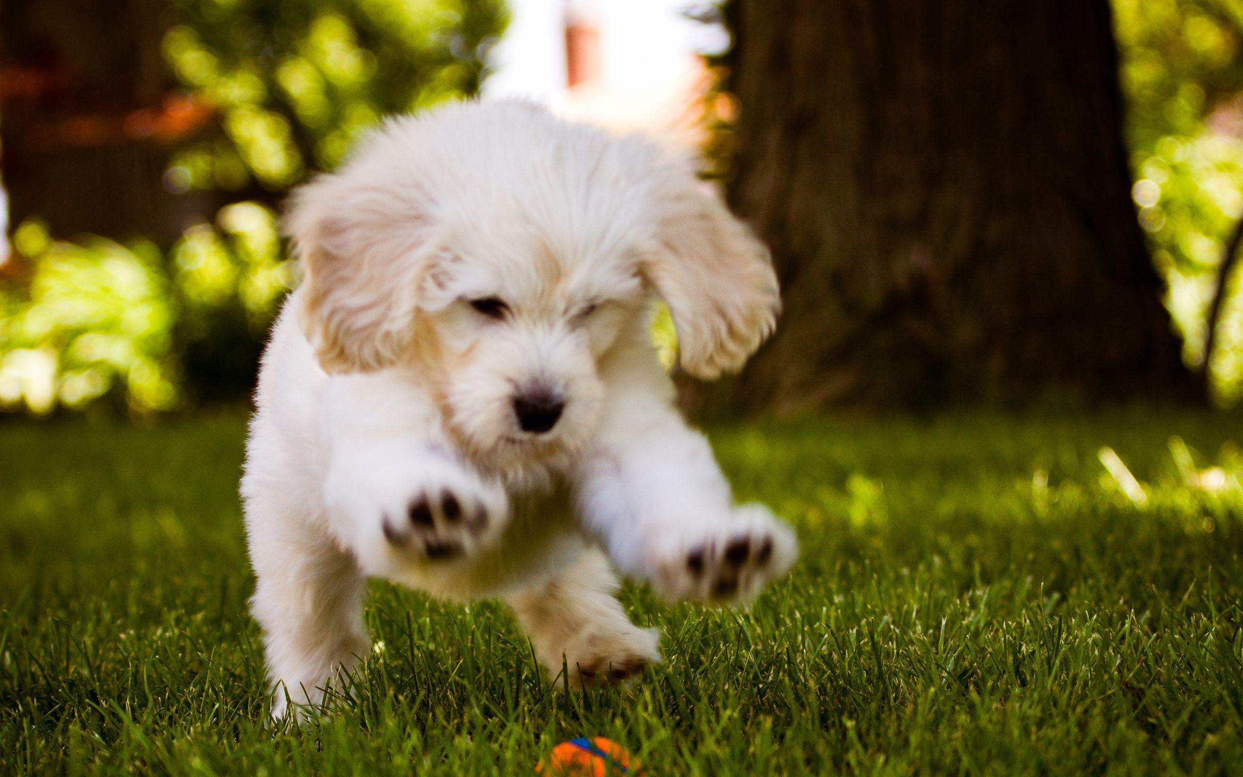 Màn hình rộng 2560x1600 cho hình nền con chó dễ thương Động vật 3D Full HD Pics