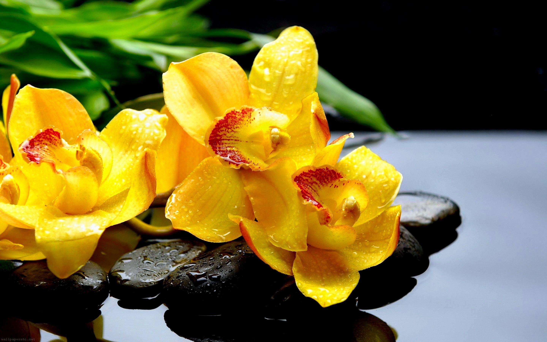 Hình nền HD 2880x1800 Bông hoa vàng
