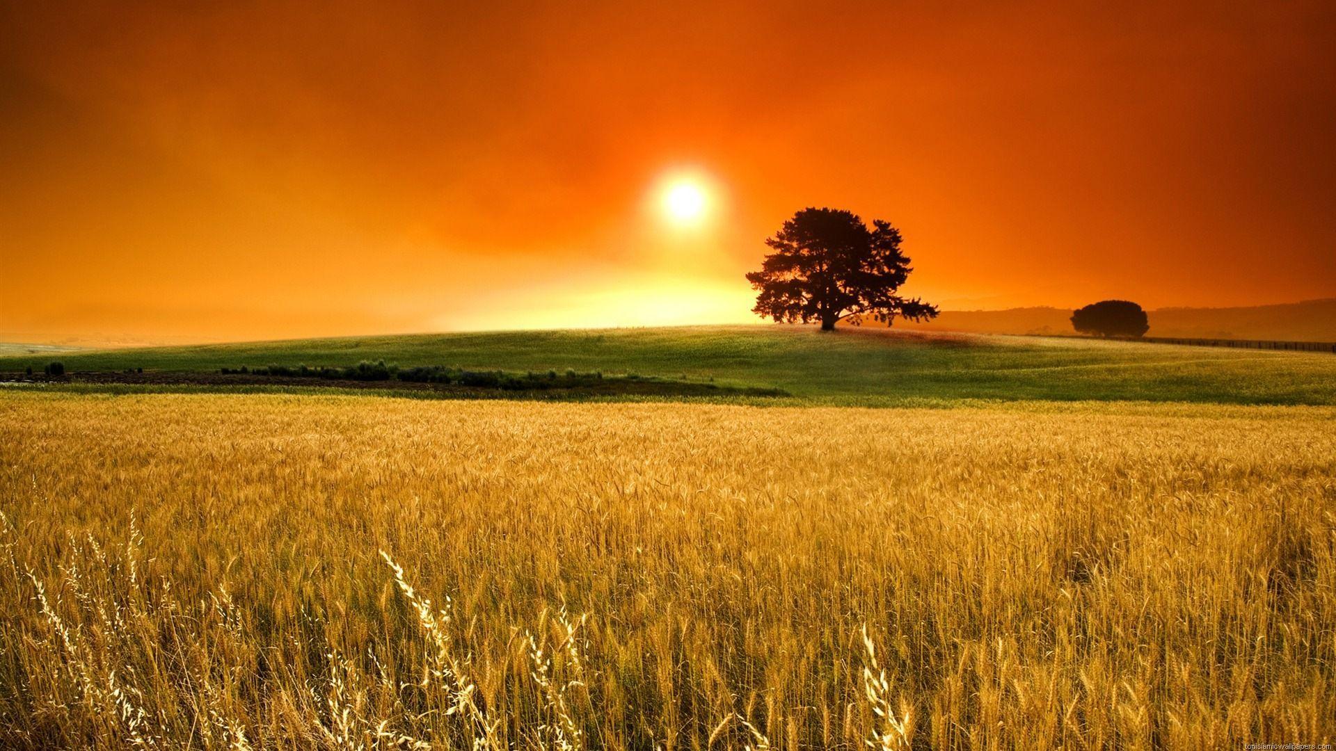 1920x1080 Hình ảnh thiên nhiên đẹp nhất của Mặt trời mọc Full HD Pics Hình nền Máy tính để bàn màu đỏ