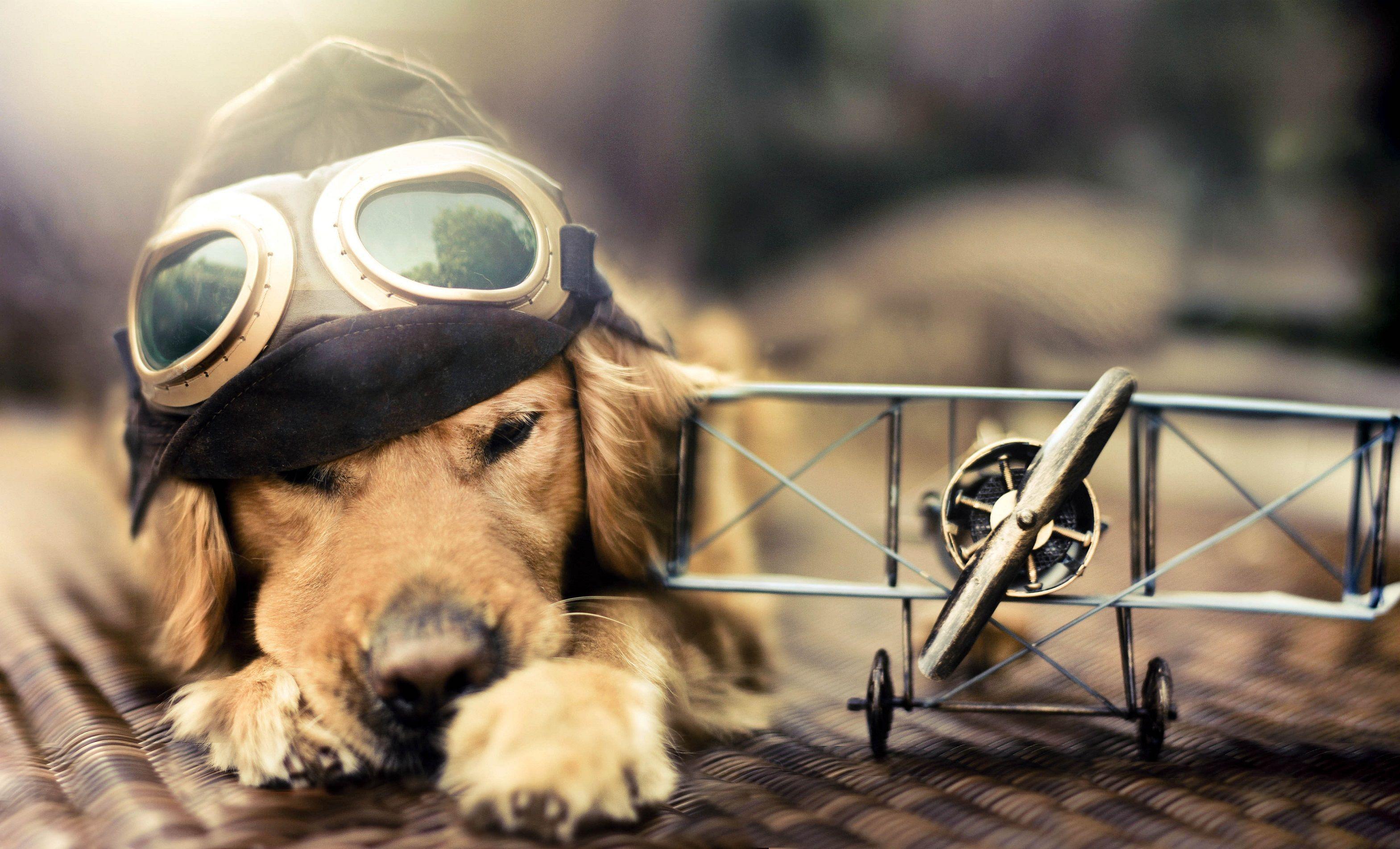 Hình nền con chó dễ thương 3138x1902