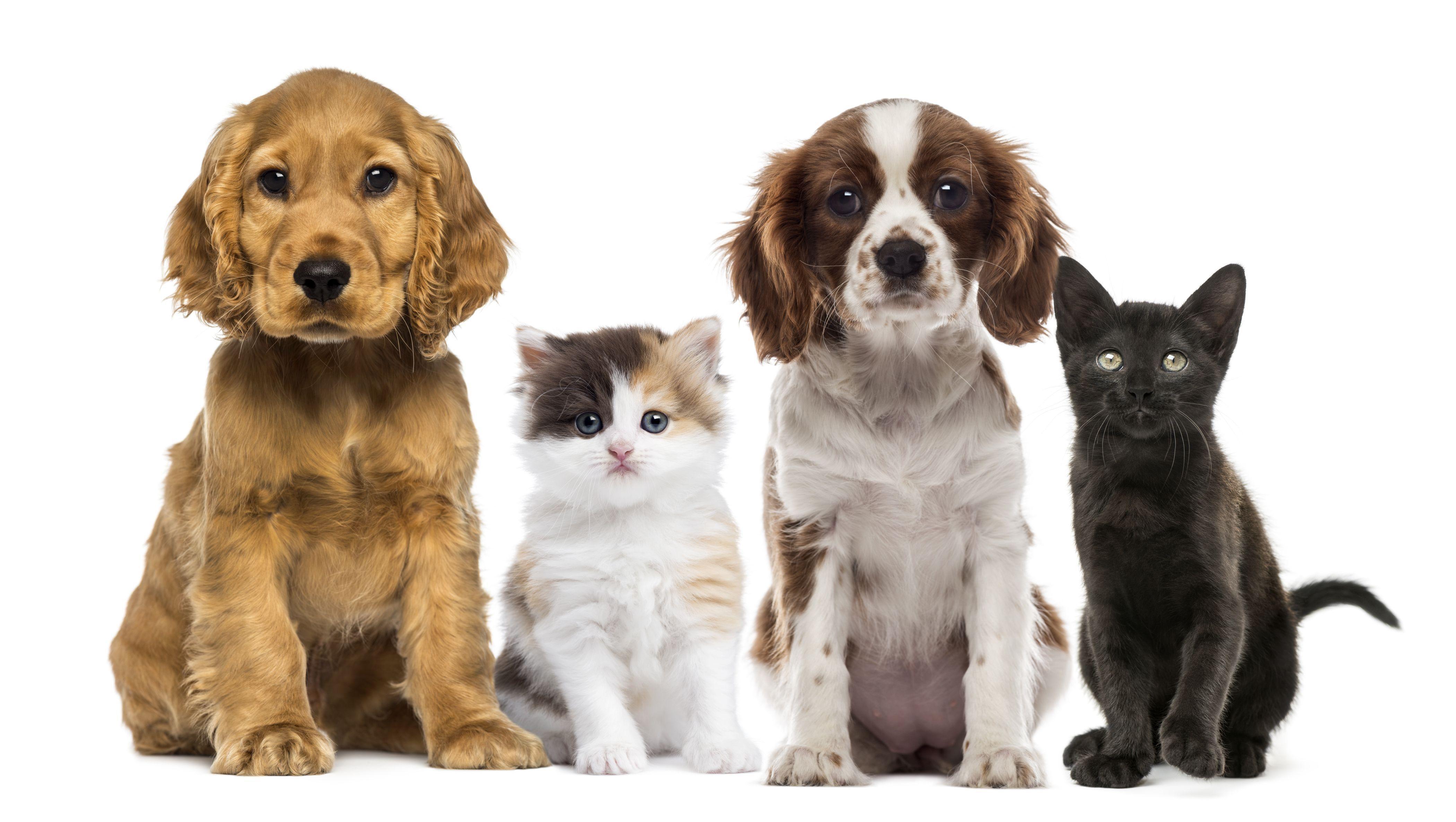 4201x2372 Hình nền mèo & chó, Hình ảnh, Hình ảnh