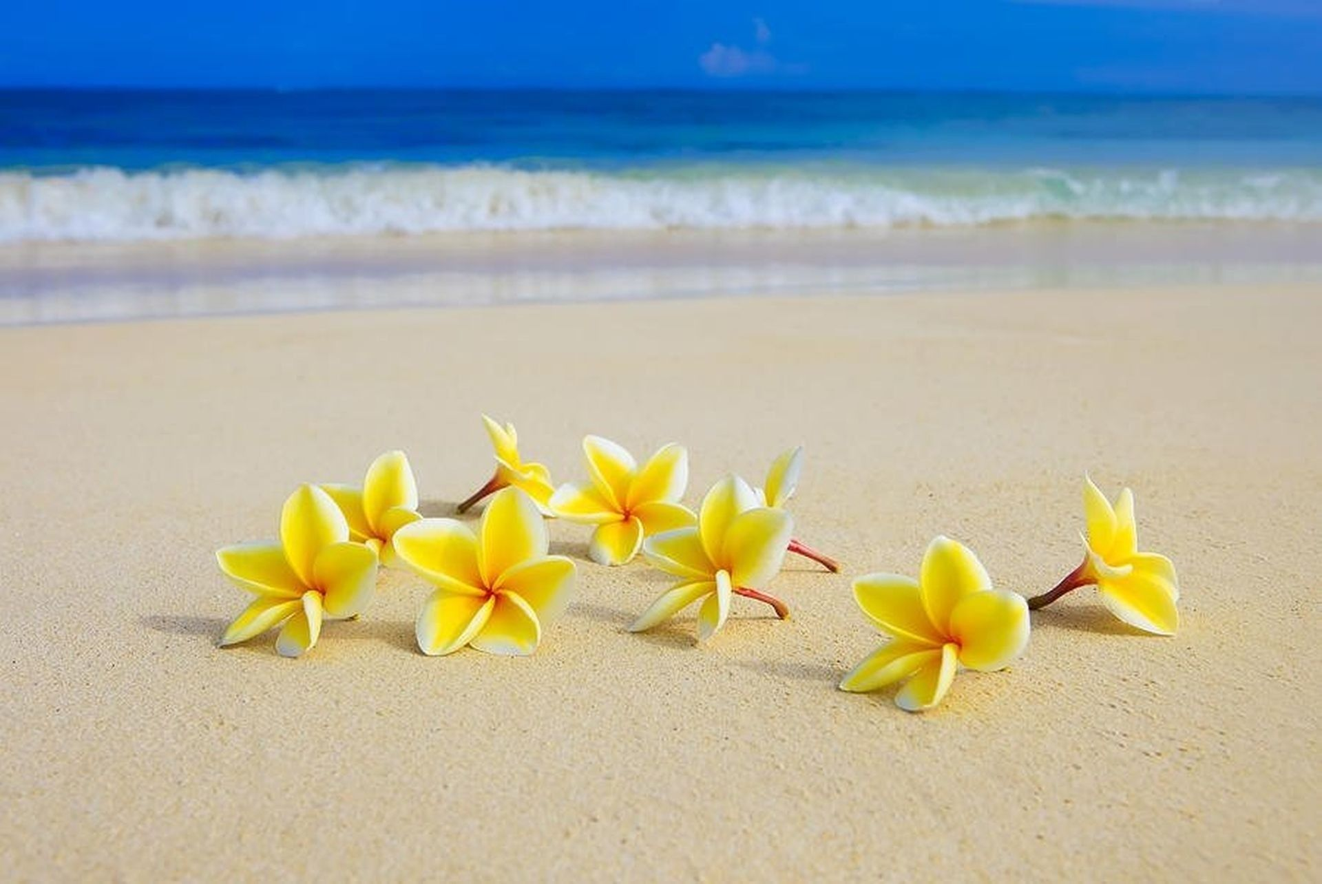 Permalink to Beach Flower Wallpaper