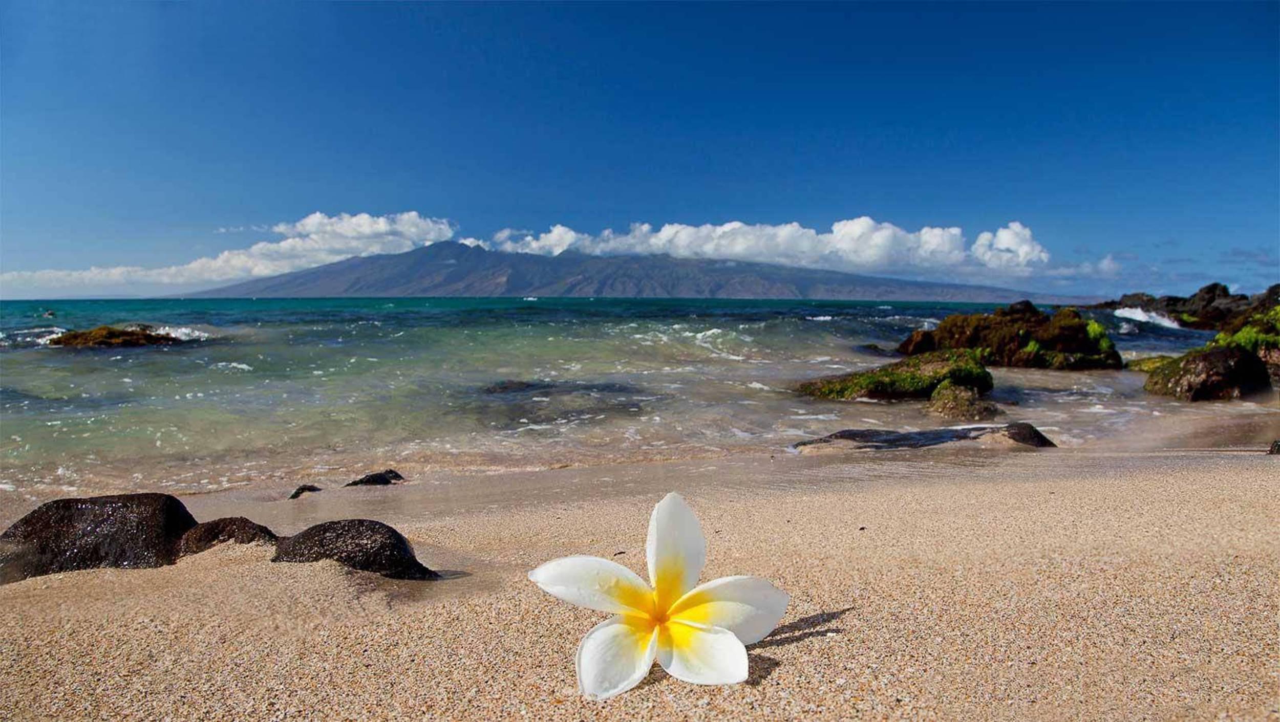 Beach Flower Wallpapers Top Free Beach Flower Backgrounds