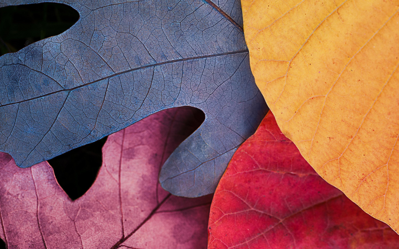 Apple Retina Wallpapers Top Free Apple Retina Backgrounds Wallpaperaccess