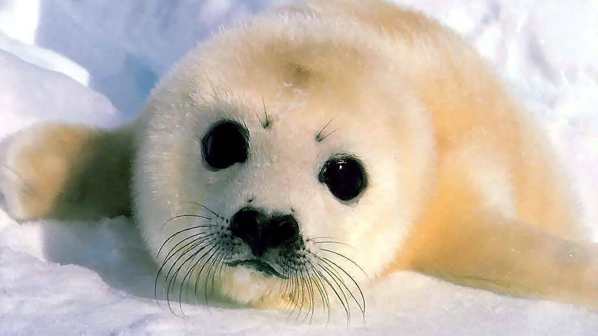 Cute Baby Animals Ever Wallpapers - Top Free Cute Baby ...