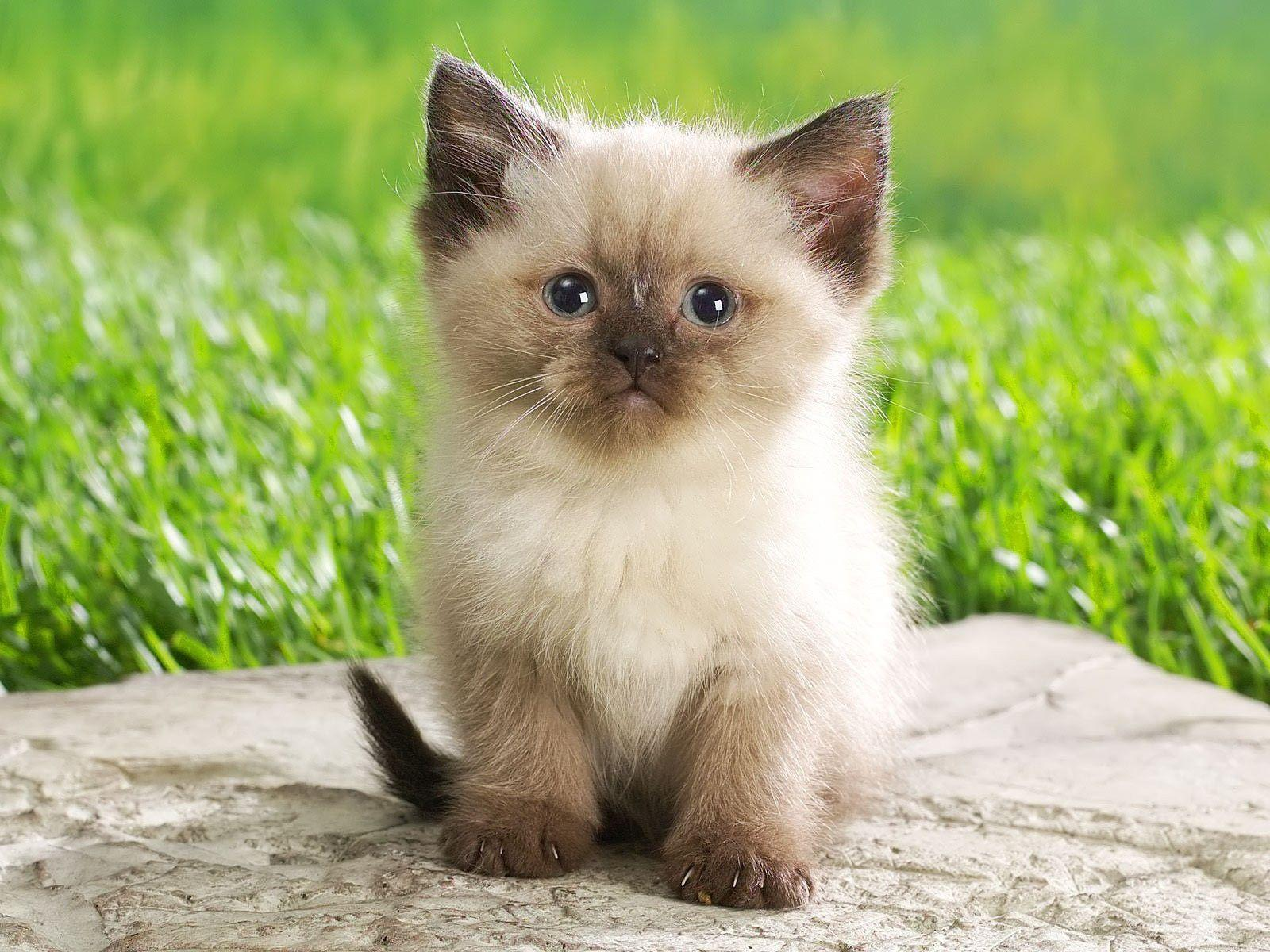 Cute Baby Animals Ever Wallpapers - Top