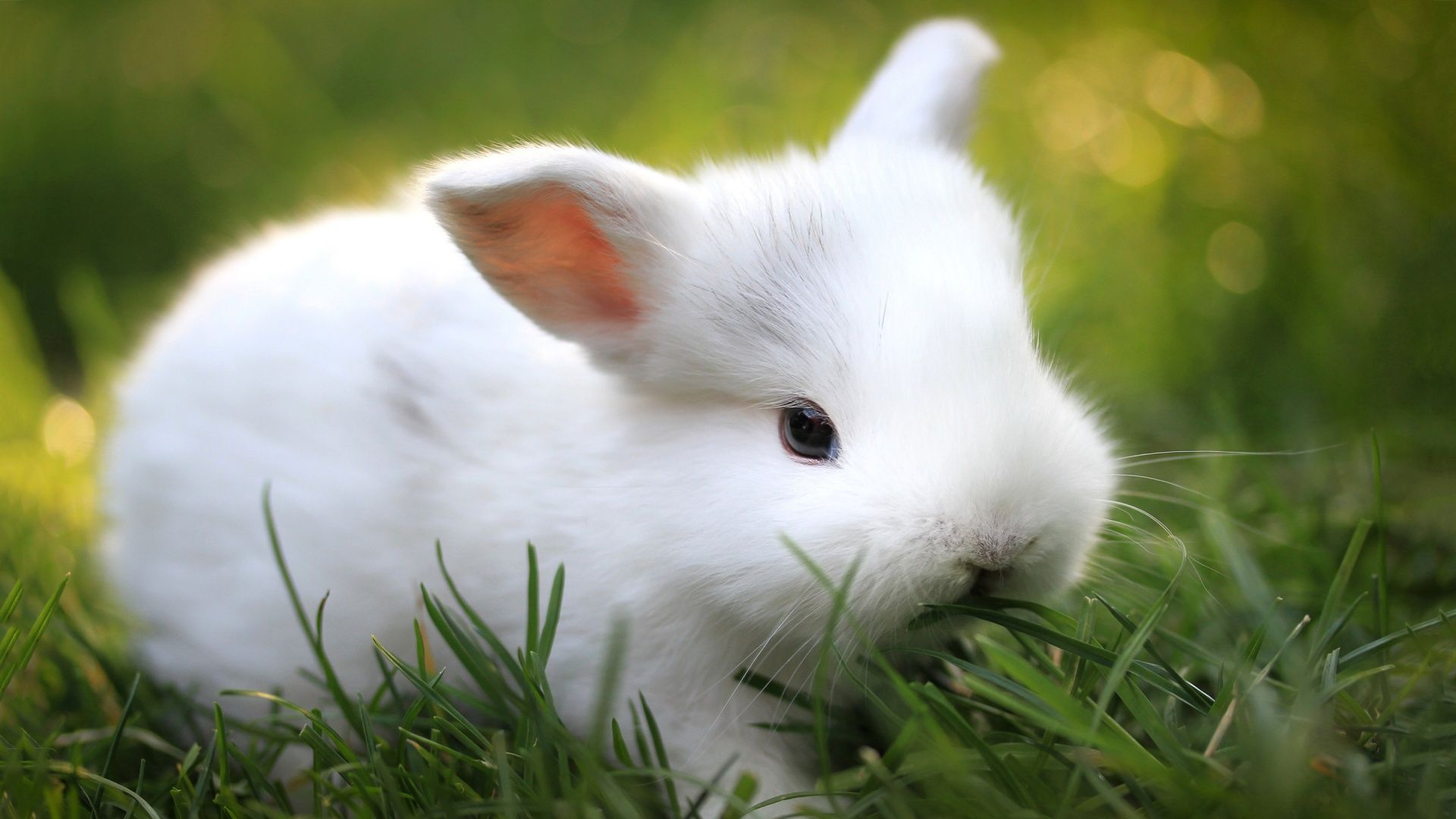 Cute Baby Animals Ever Wallpapers Top Free Cute Baby Animals Ever Backgrounds Wallpaperaccess